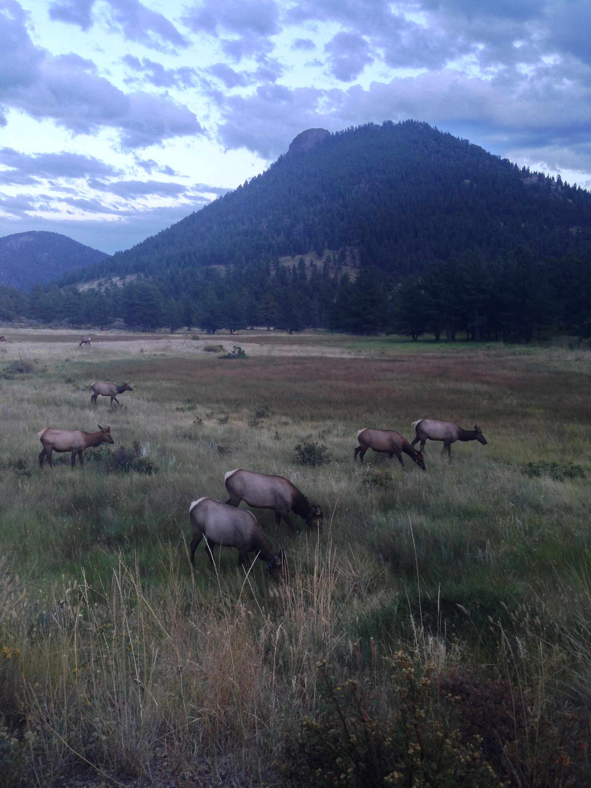 Wildlife in Rocky Mountain National Park, CO