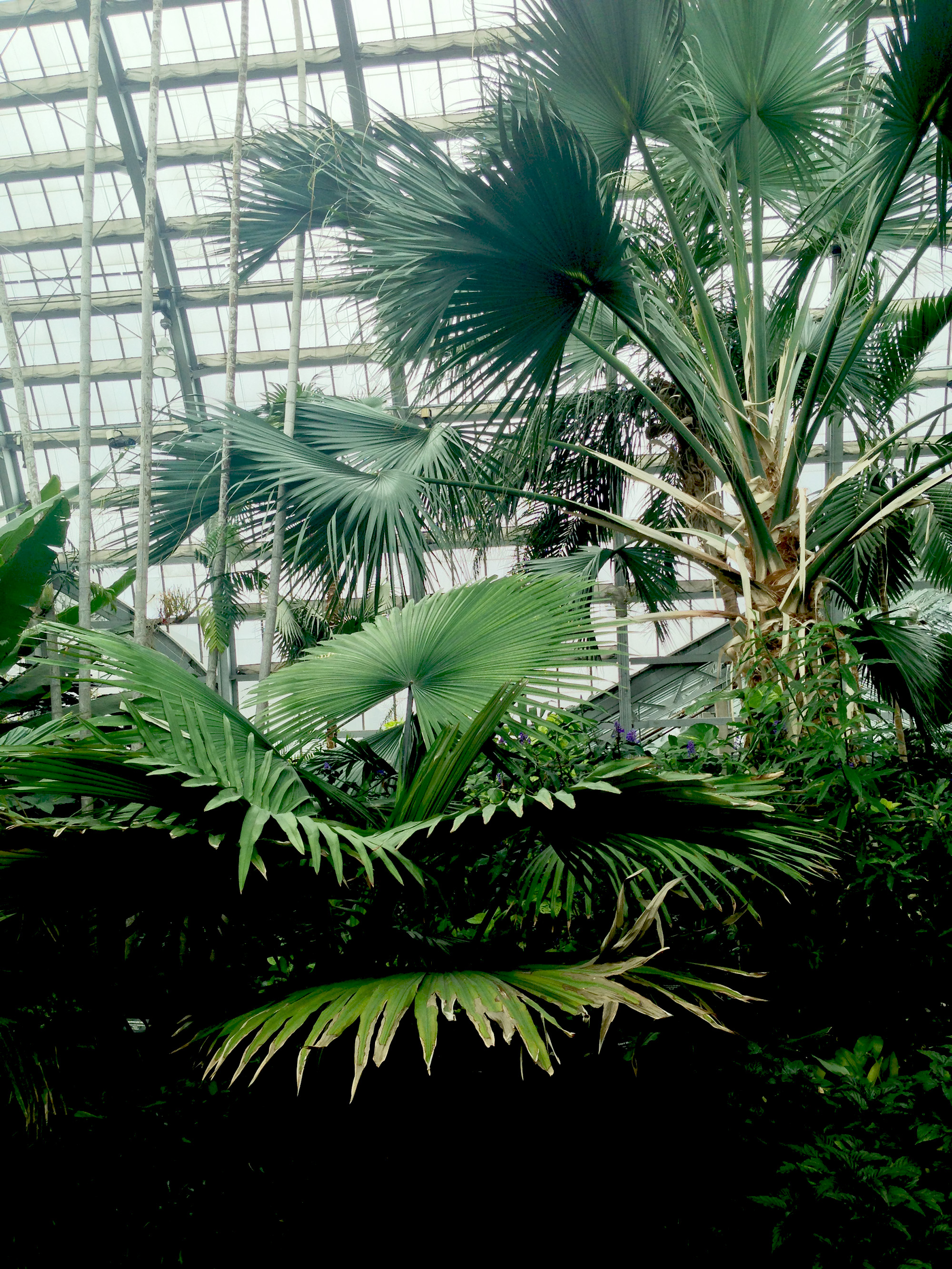 Palm Room, Garfield Park Conservatory, Chicago Illinois