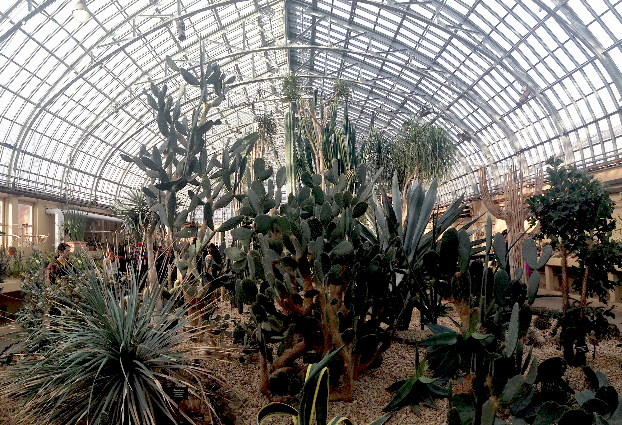Desert Room, Garfield Park Conservatory, Chicago Illinois