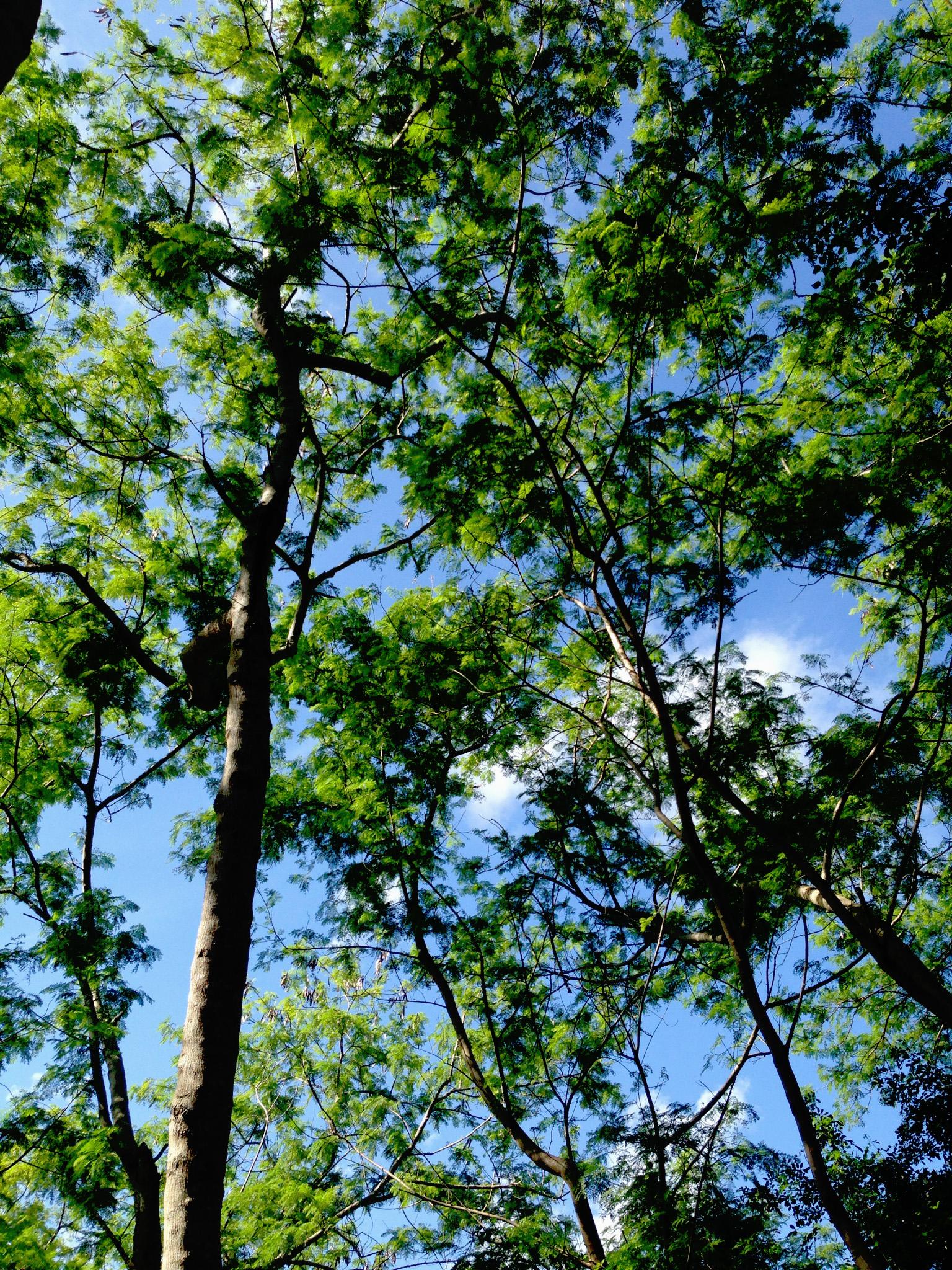 Trees in Miami, Florida / Darker than Green