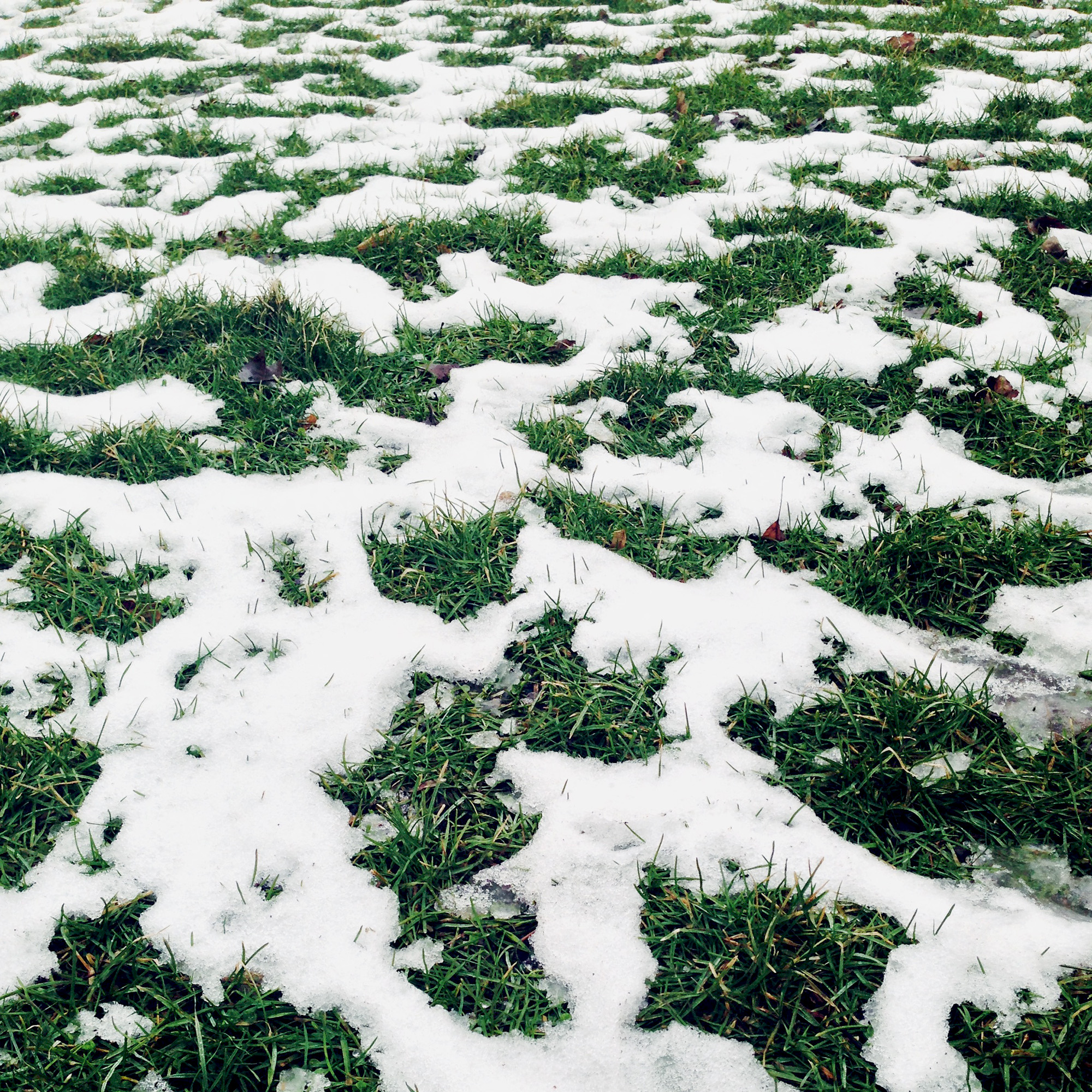 Grass and snow, Welles Park, Chicago Illinois