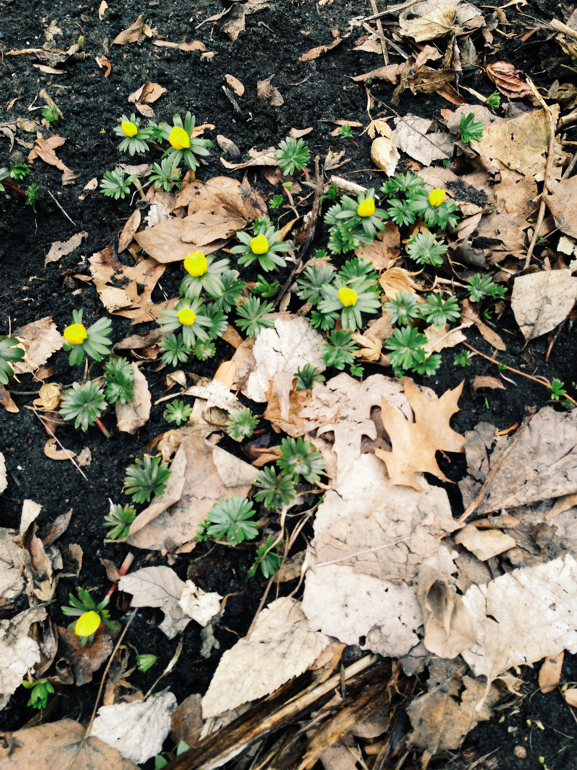 Spring plants / Darker than Green