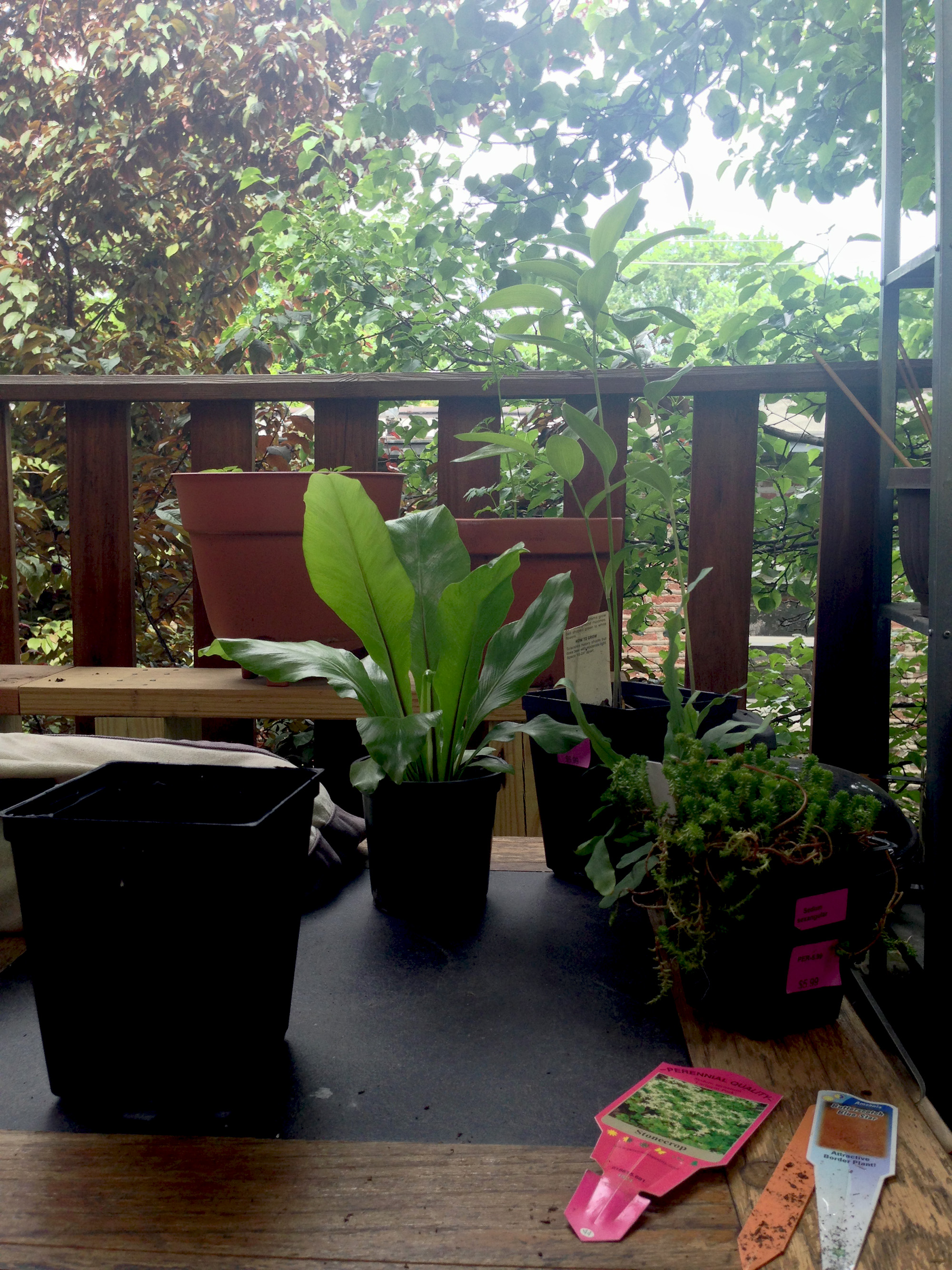 New plants on the porch / Darker than Green