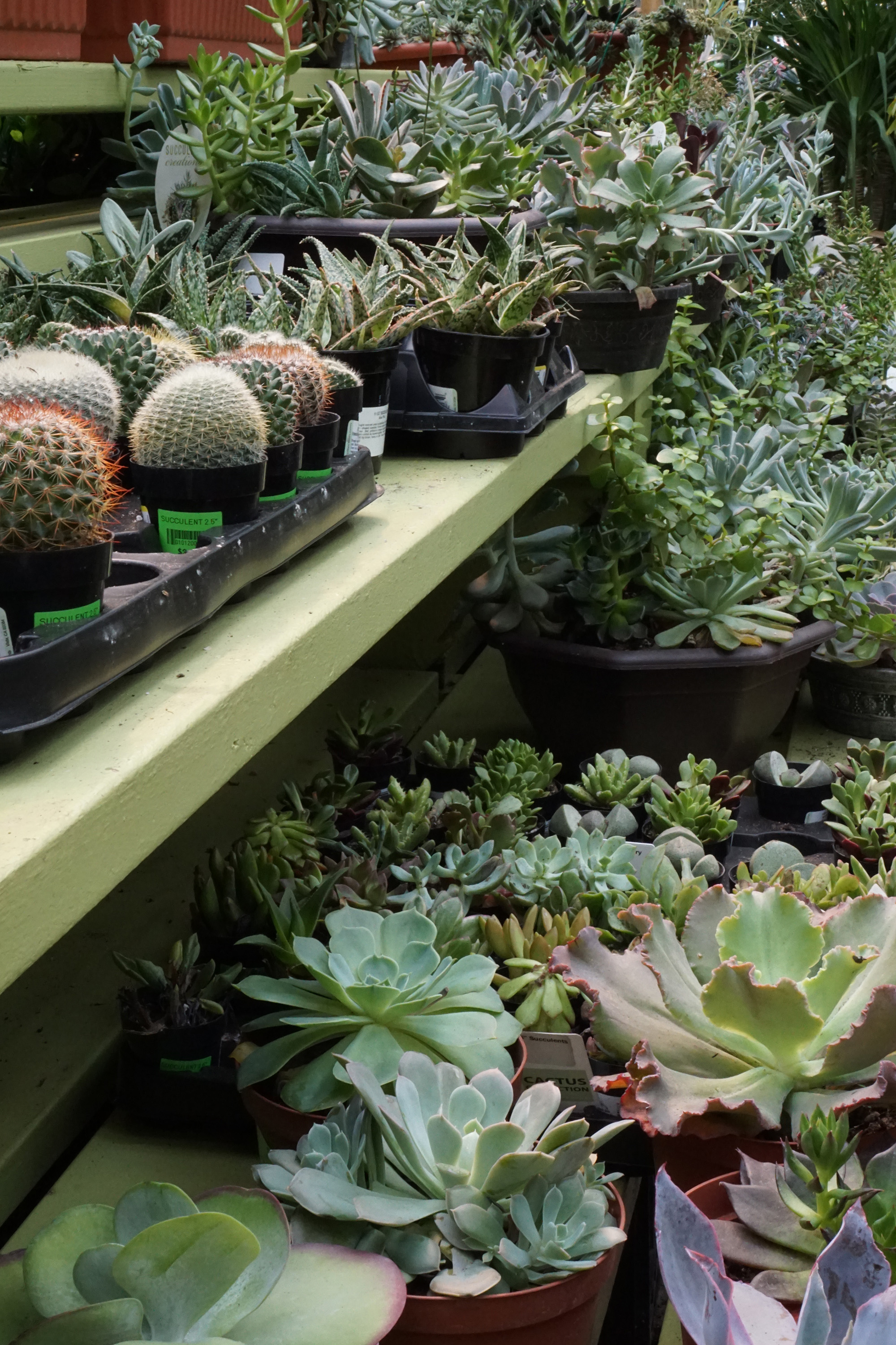Succulents in Gethsemane Garden Center in Chicago / Darker than Green