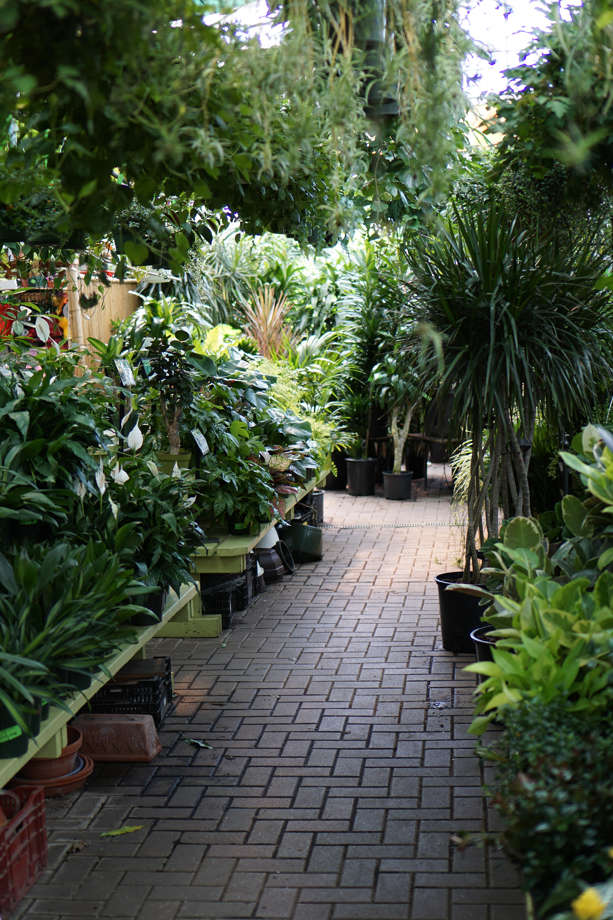 Gethsemane Garden Center in Chicago / Darker than Green