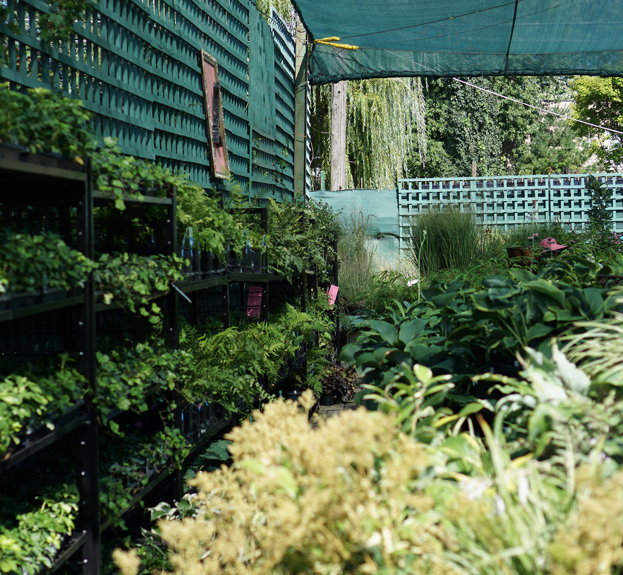 Perennials in Gethsemane Garden Center in Chicago / Darker than Green