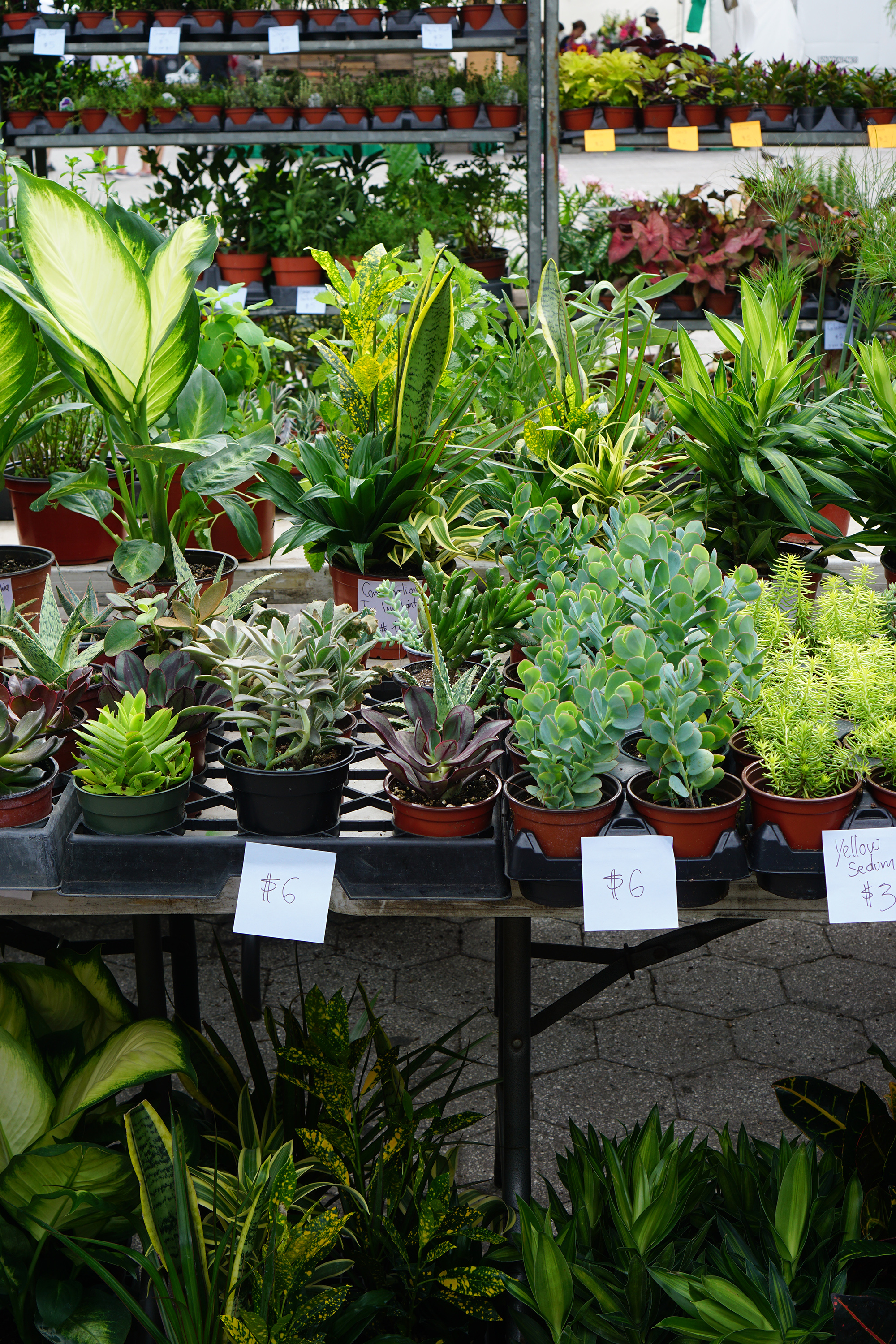 Plants at the Union Square Greenmarket / NYC Green City Guide / Darker than Green