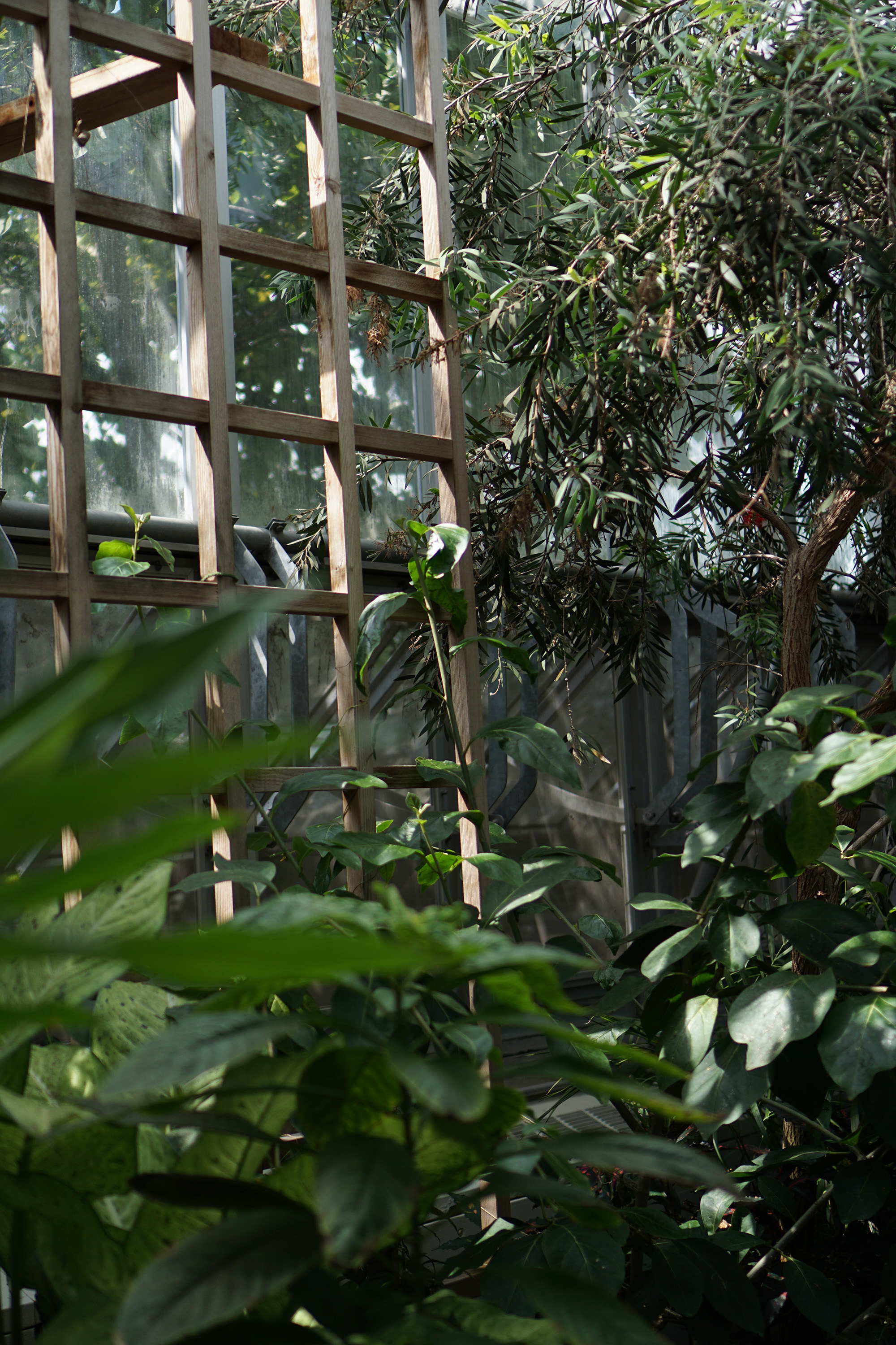 Tropical house, Chicago Botanic Garden / Darker than Green