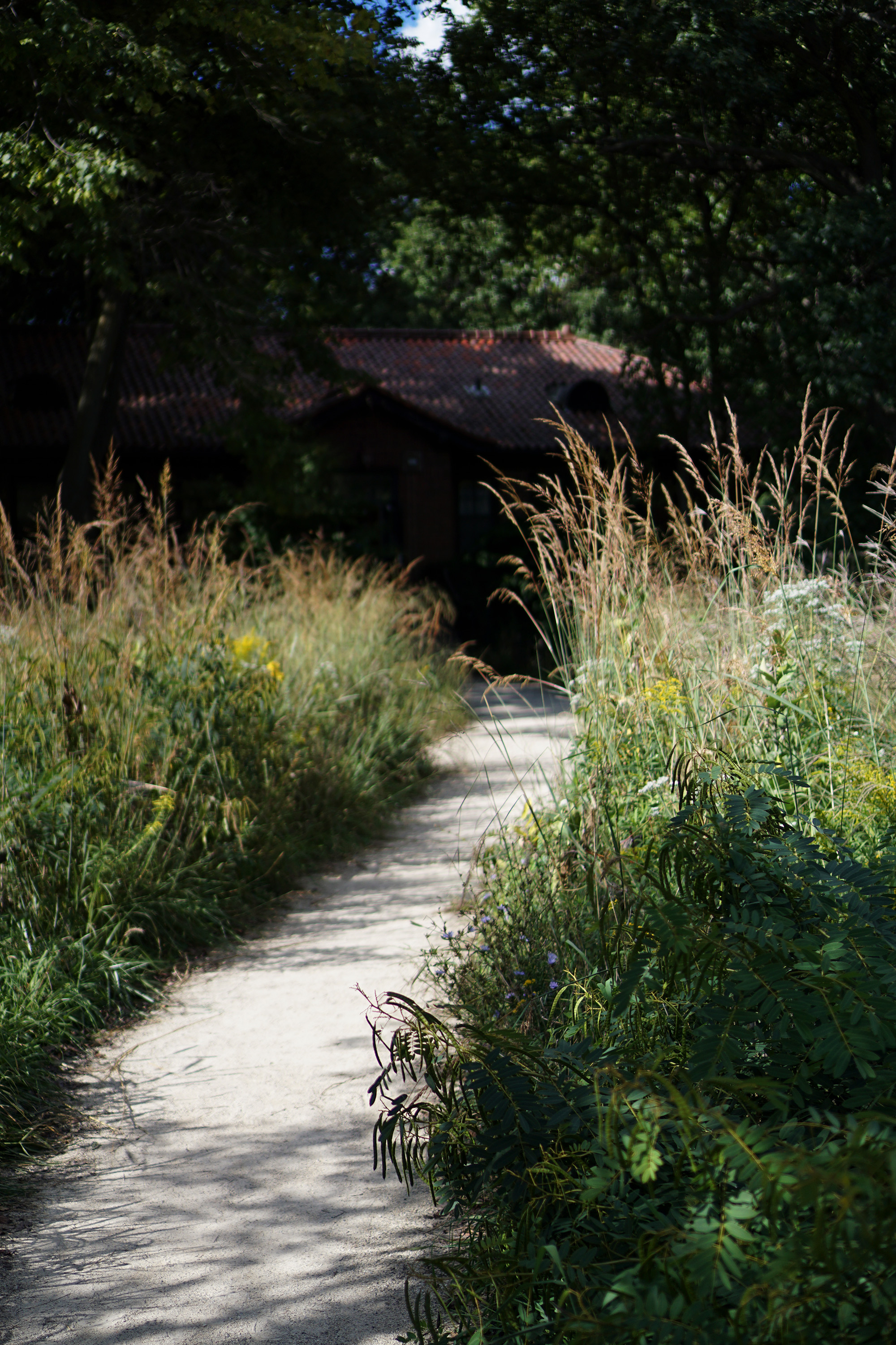 Path to the Nature Center, Chicago IL / Darker than Green