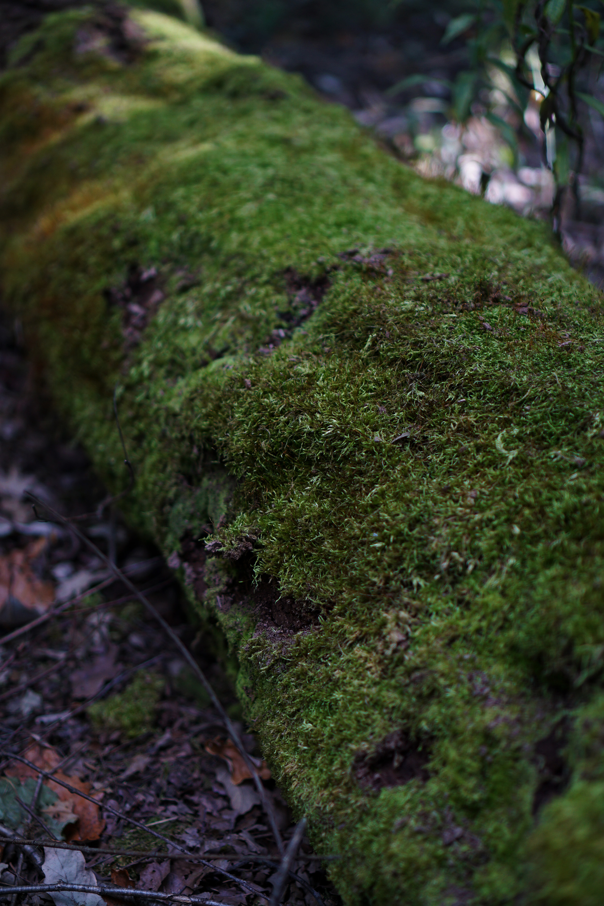 Mossy fallen tree, North Park Village Nature Center / Darker than Green