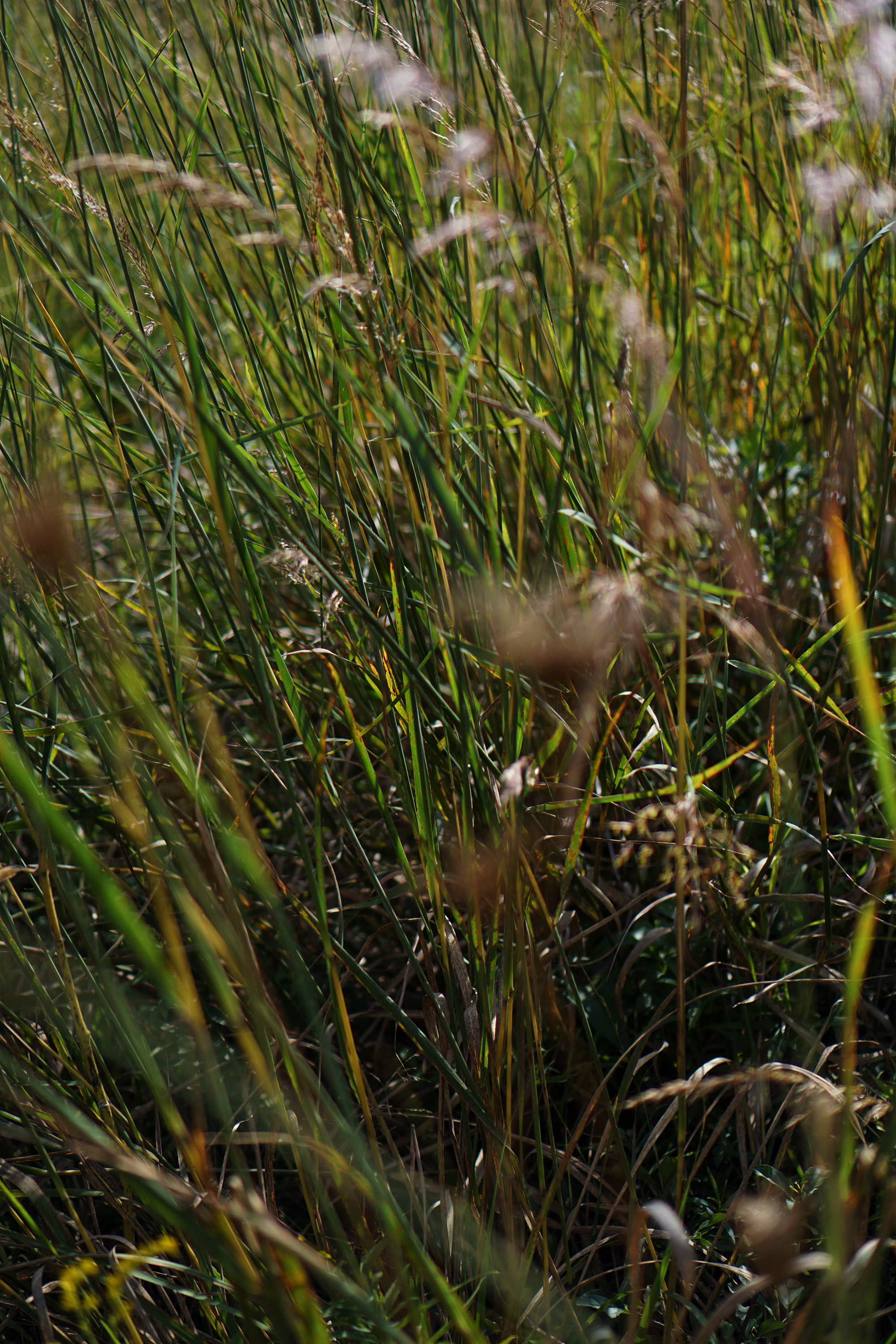 Wild grasses, North Park Village Nature Center / Darker than Green