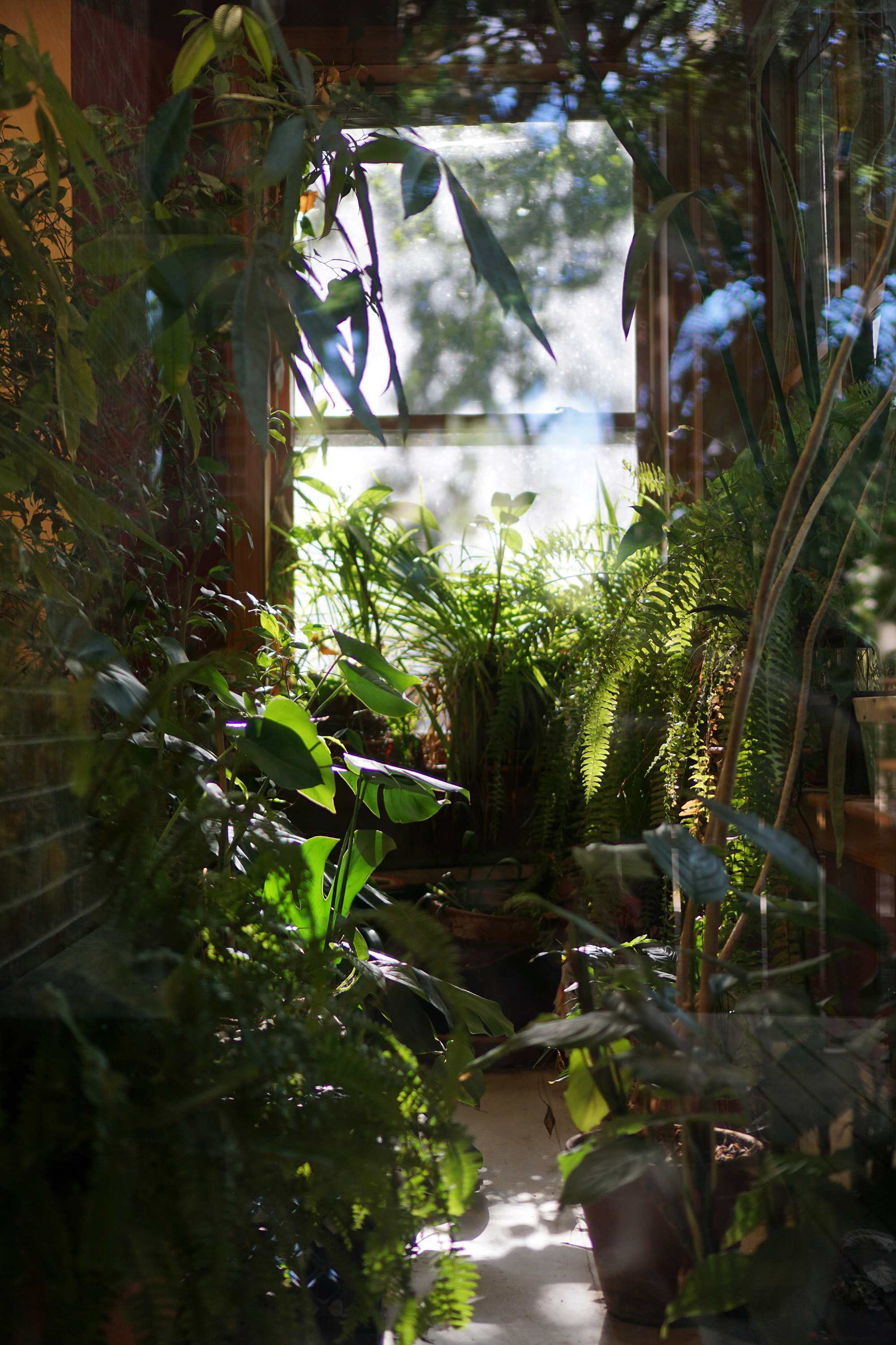 Indoor plants, North Park Village Nature Center / Darker than Green