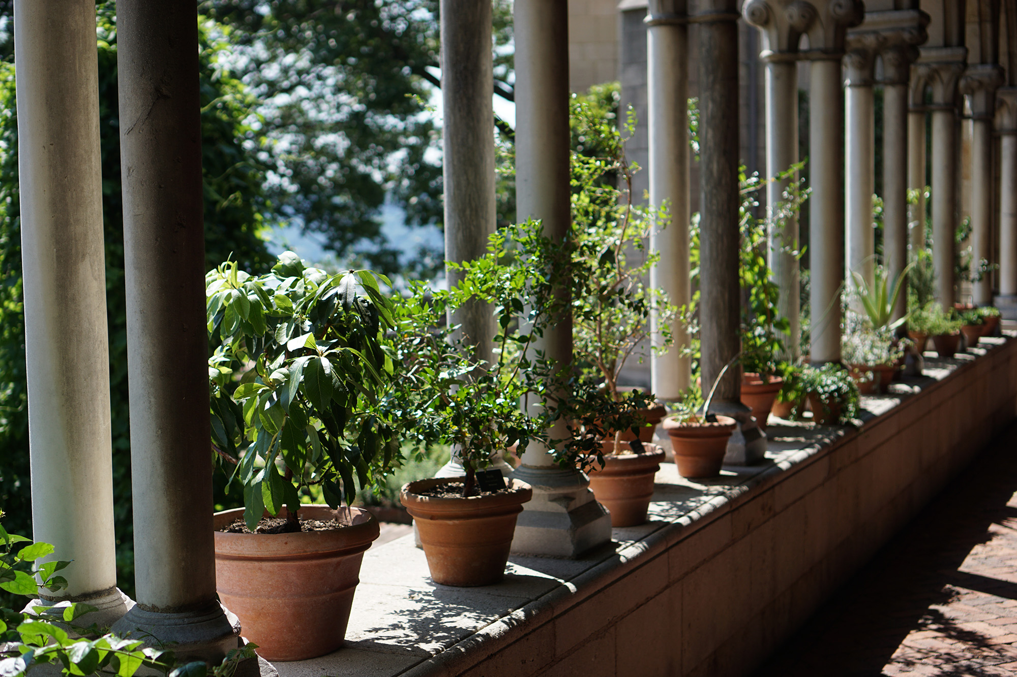 The Cloisters, New York City / Darker than Green