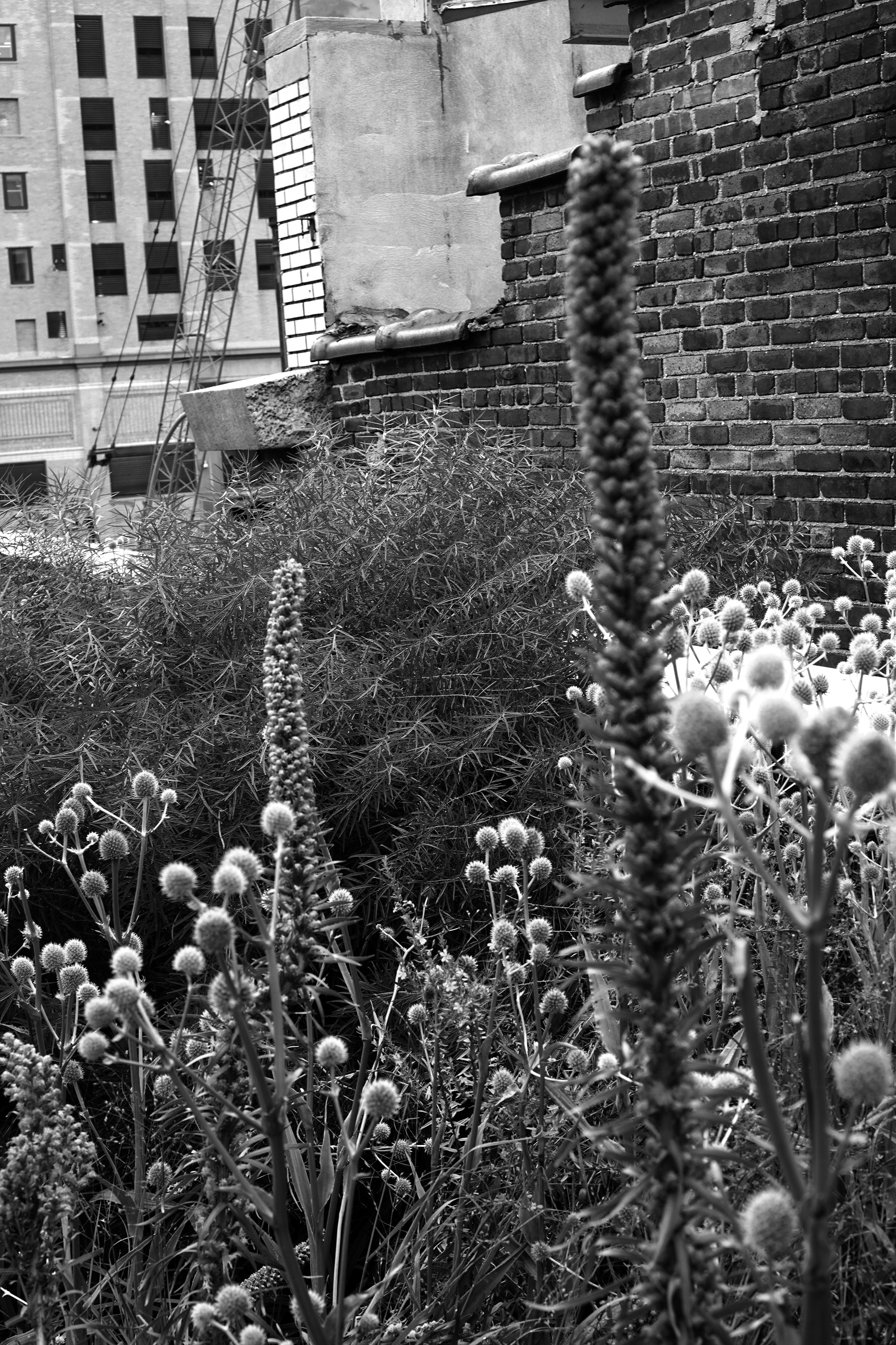 The High Line, New York City / Darker than Green
