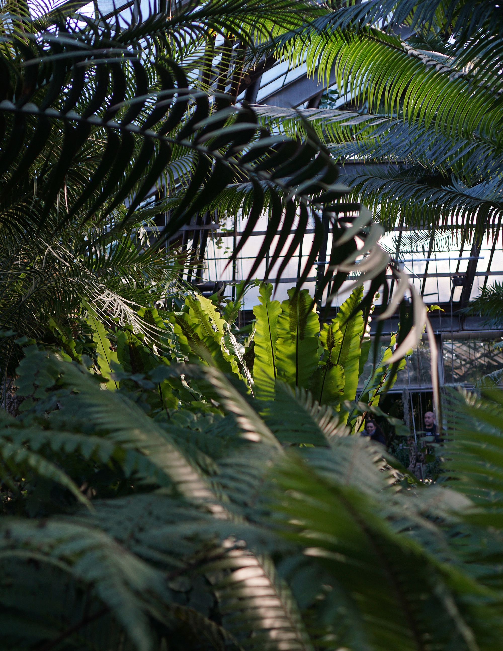 Ferns in the Lincoln Park Conservatory, Chicago / Darker than Green