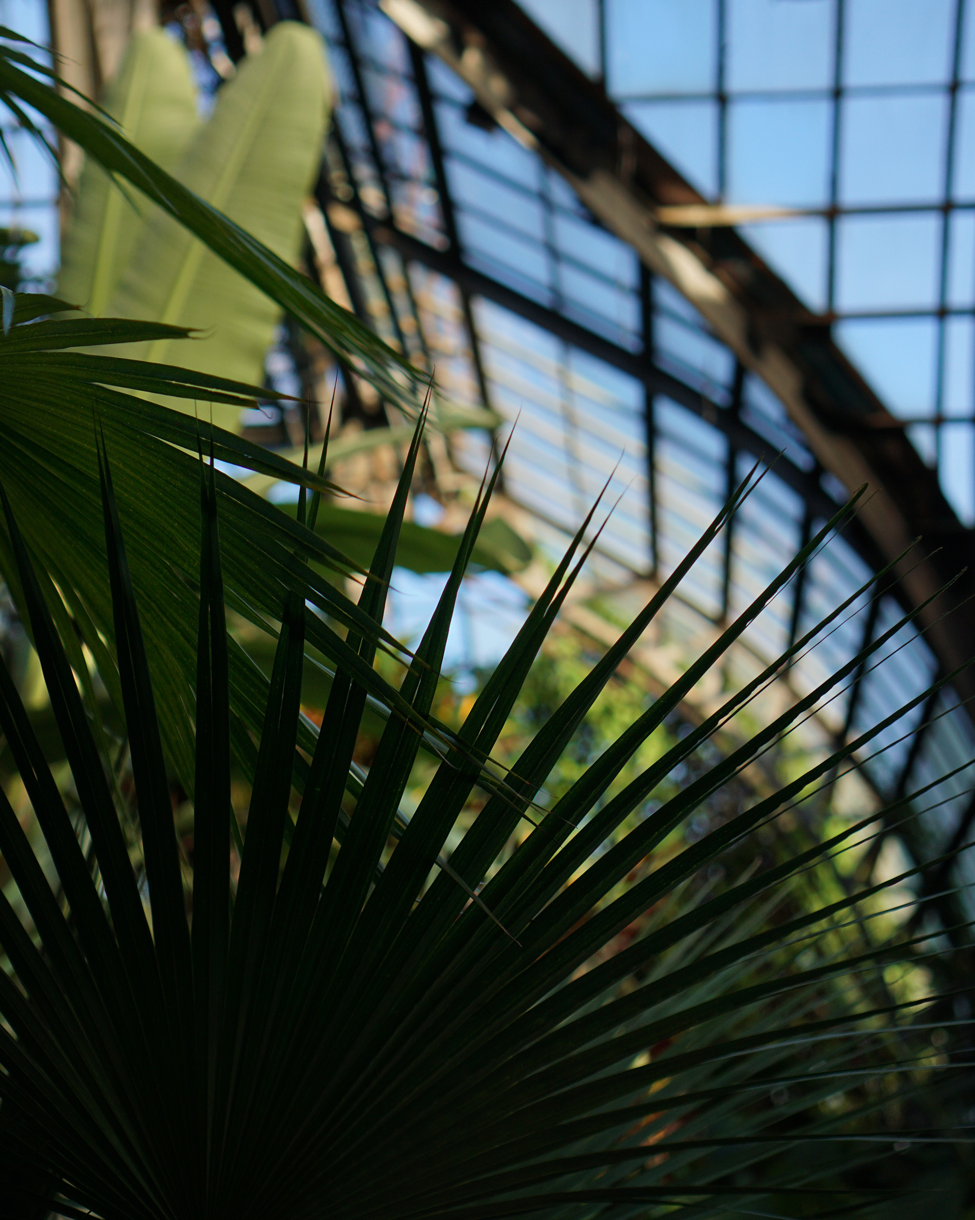 Palms in the Lincoln Park Conservatory, Chicago / Darker than Green