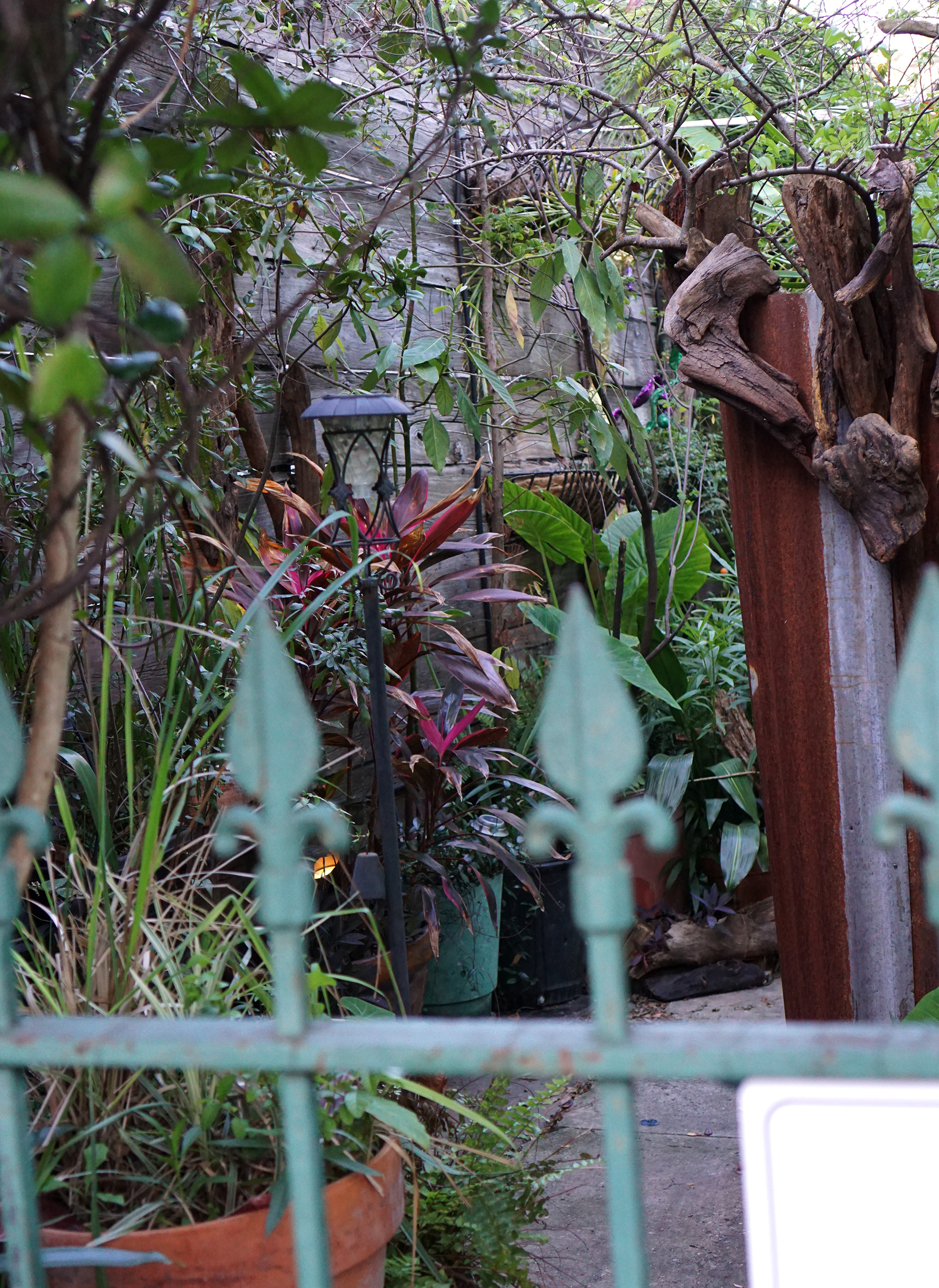 Backyard container garden in the Marigny, New Orleans / Darker than Green