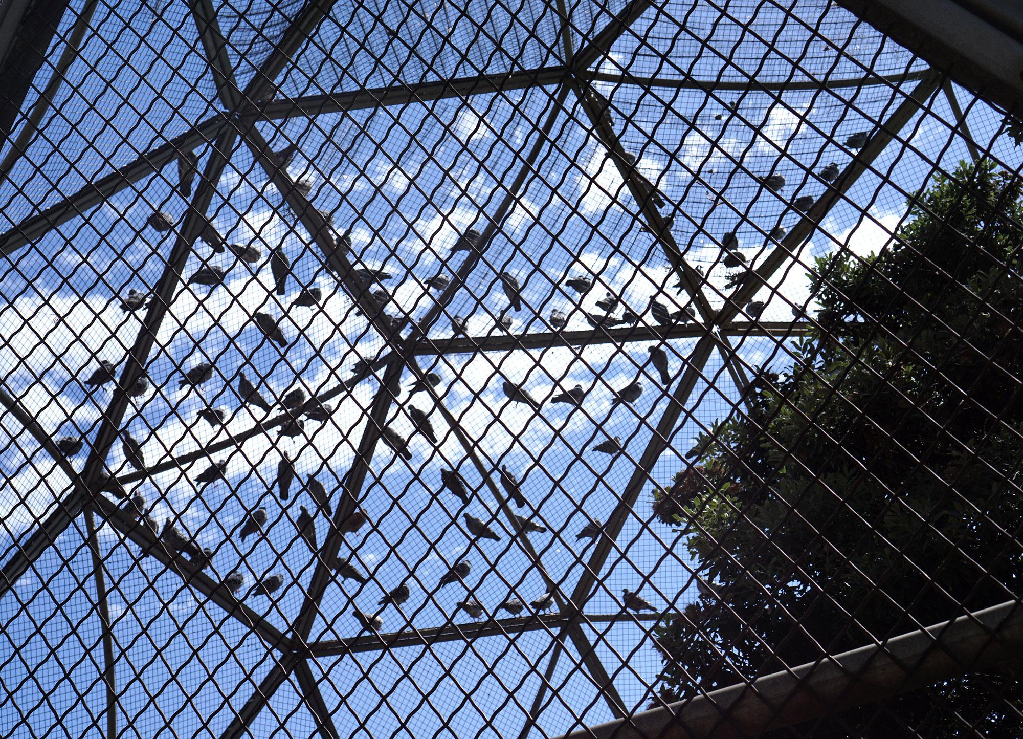 Birds perched at Lake Merritt, Oakland California / Darker than Green