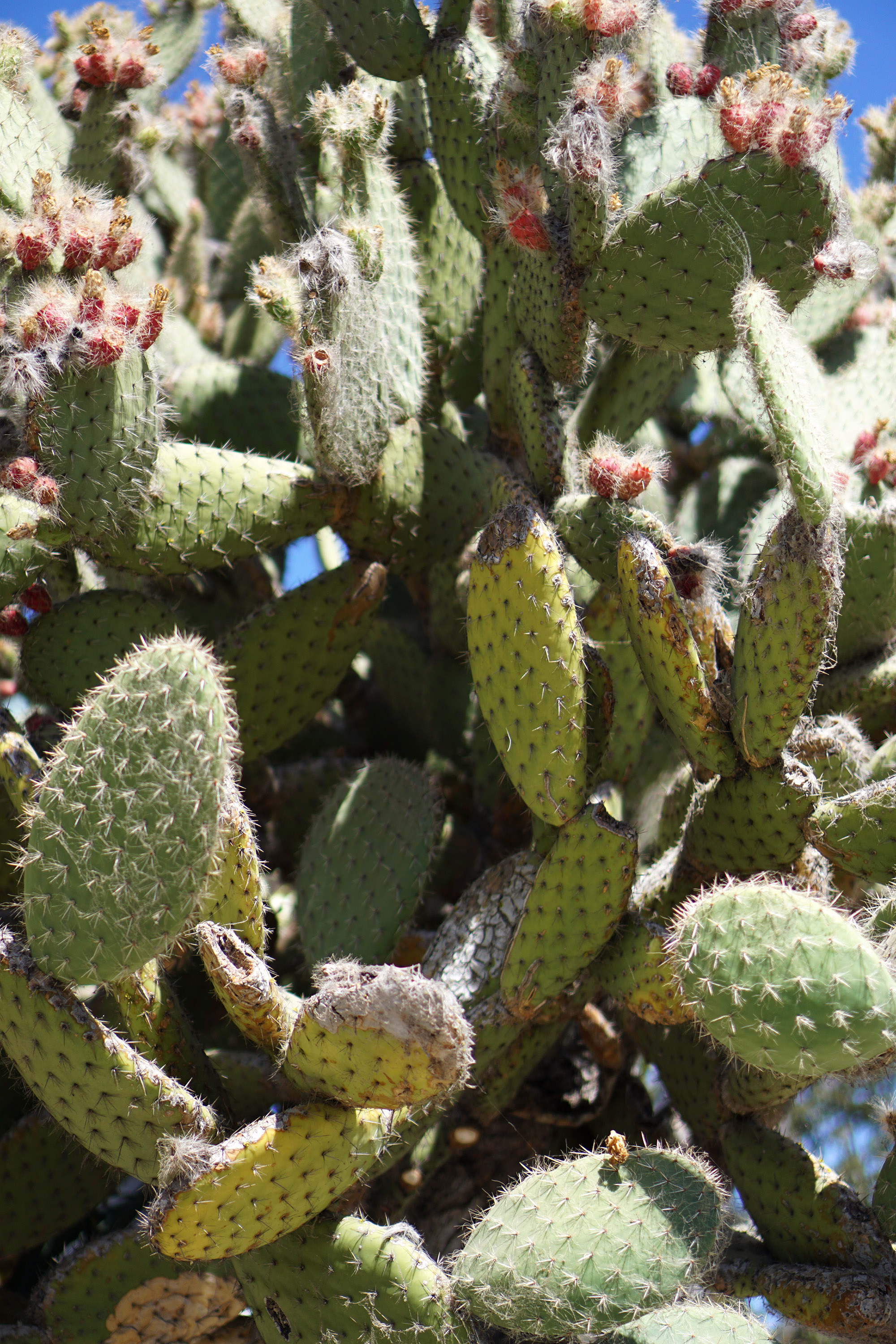 Cacti at The Gardens at Lake Merritt, Oakland California / Darker than Green