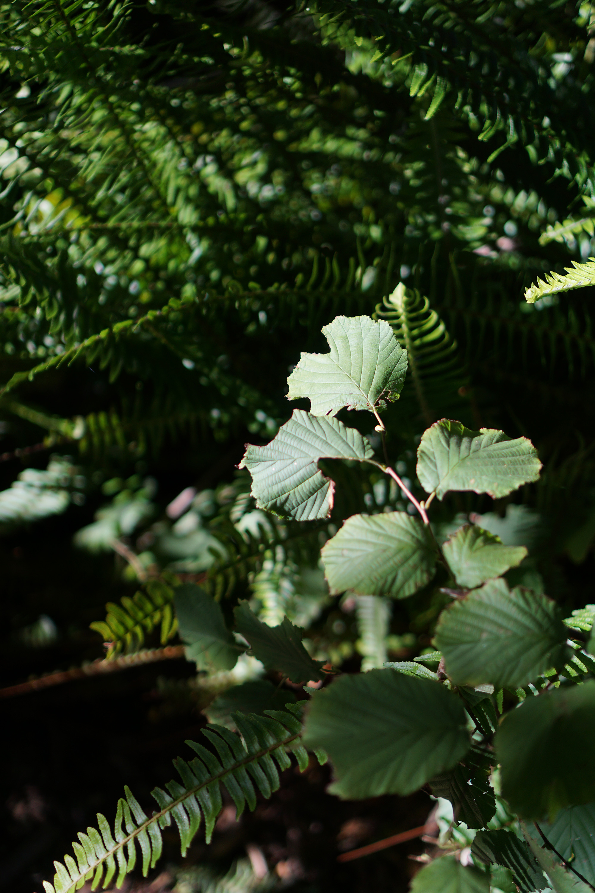 Plants in dappled sunlight, San Francisco Botanical Garden / Darker than Green