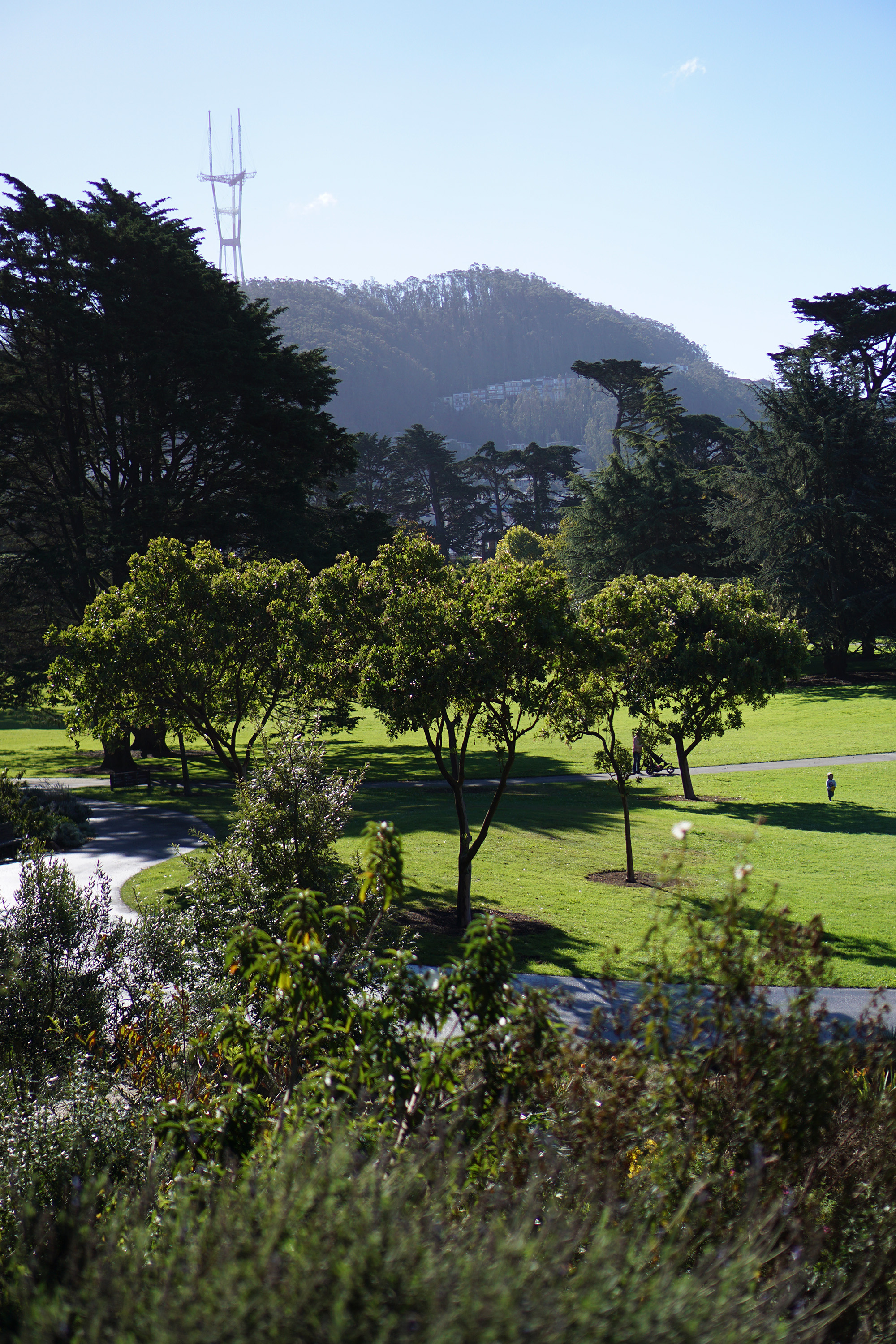 Wide view of the San Francisco Botanical Garden / Darker than Green