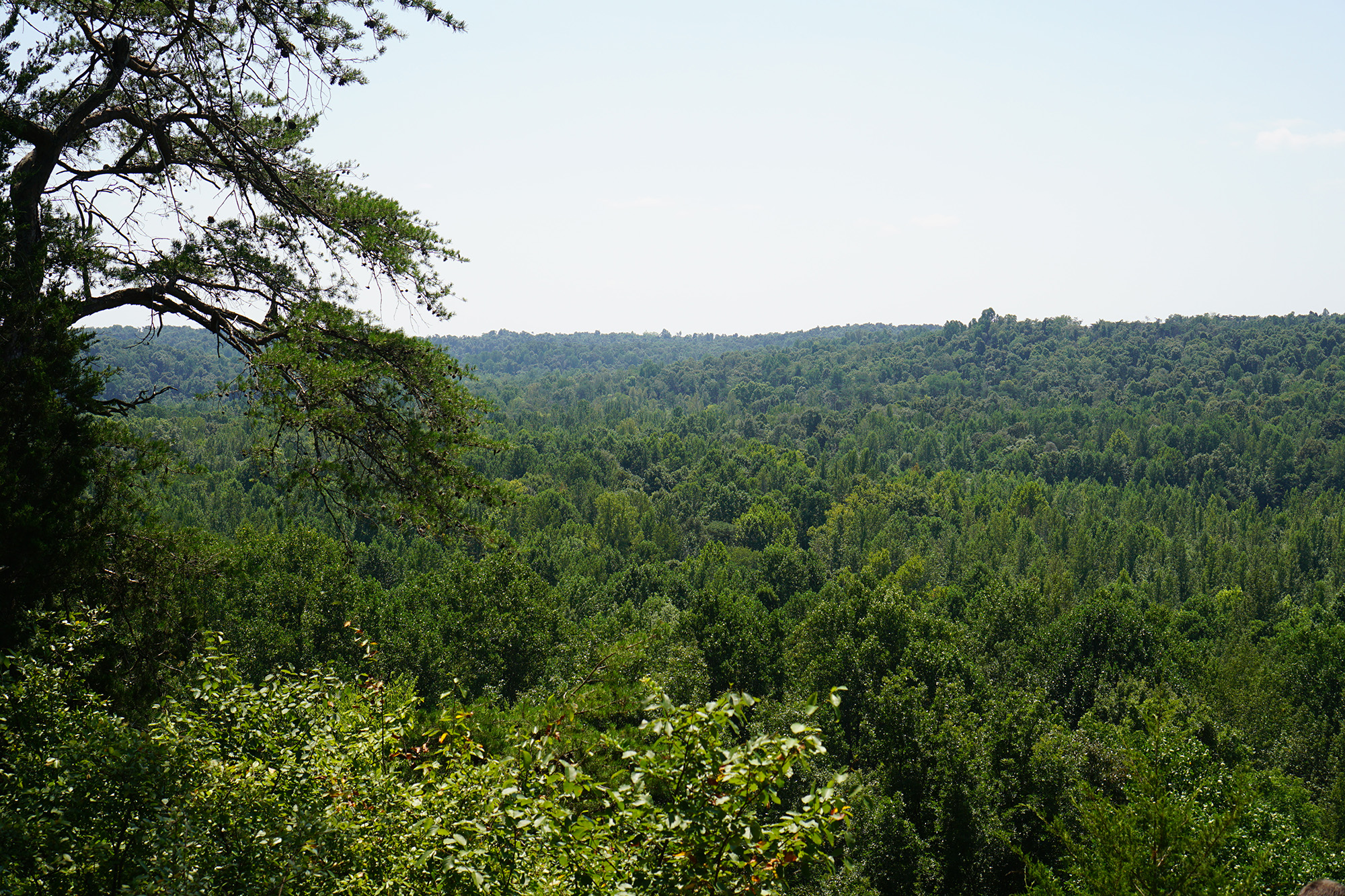 View from Hunter's Bluff, Jones-Keeney Wildlife Management Area, Kentucky / Darker than Green