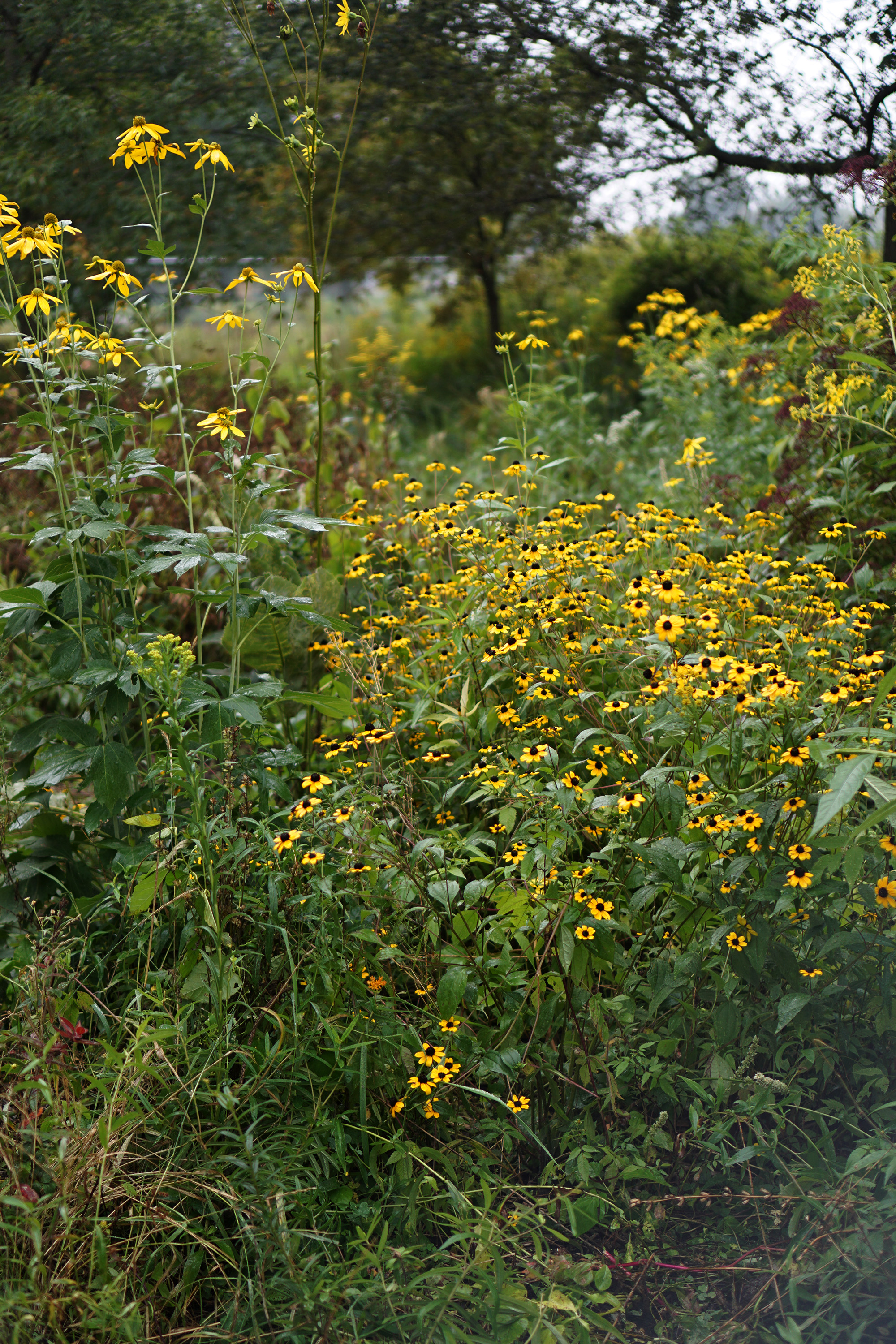 Native plants in Jackson Park / Darker than Green