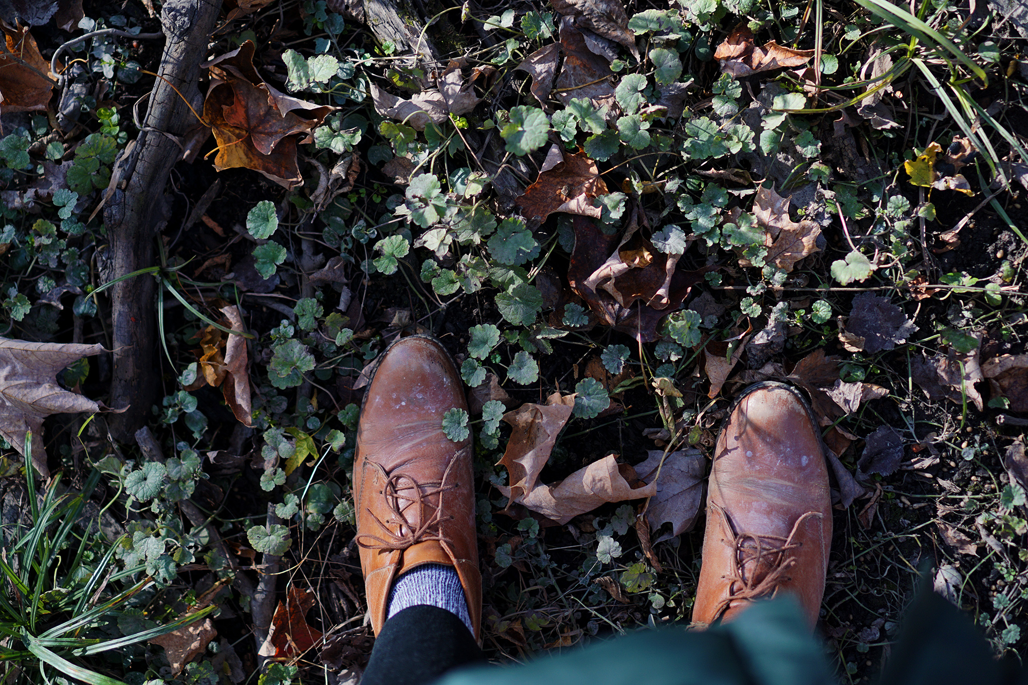 Boots in a patch of creeping charlie, Miami Woods, Morton Grove Illinois / Darker than Green