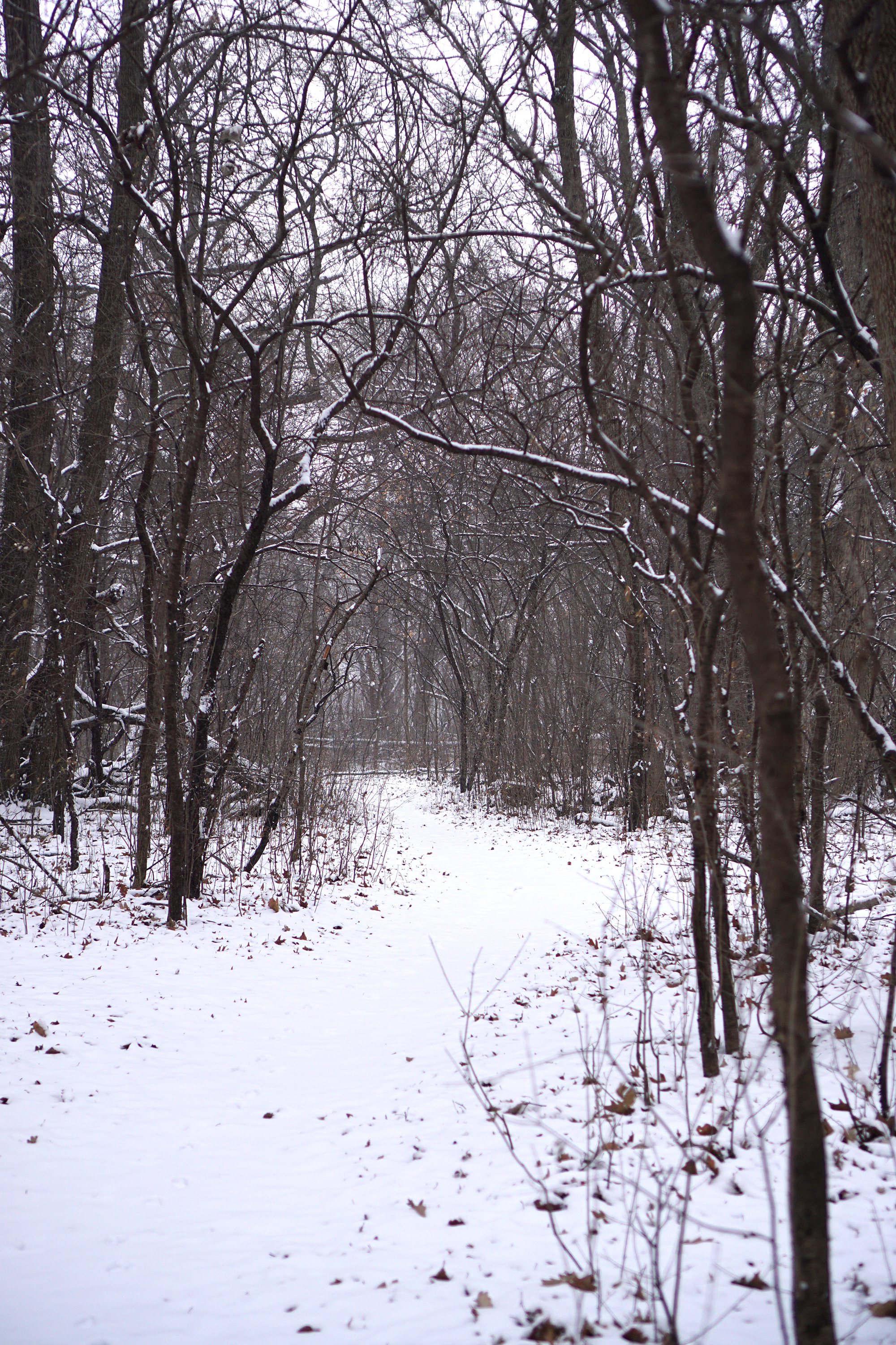 Snowy path in the LaBagh Woods, Chicago IL / Darker than Green