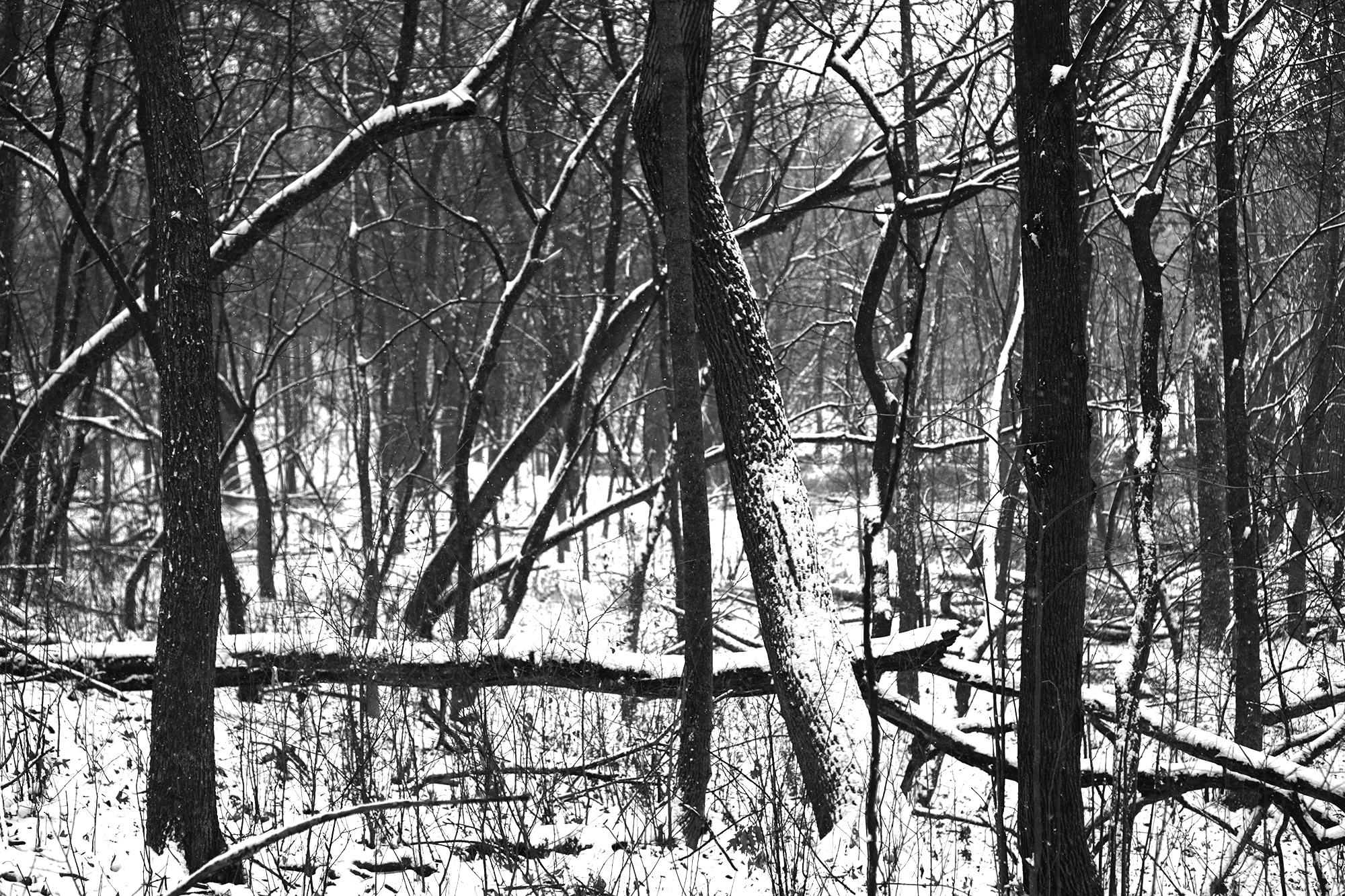 Darker than green nature writing all hardy pioneers who must have walked these paths just before us curving the trails slowly in wonder sciox Images