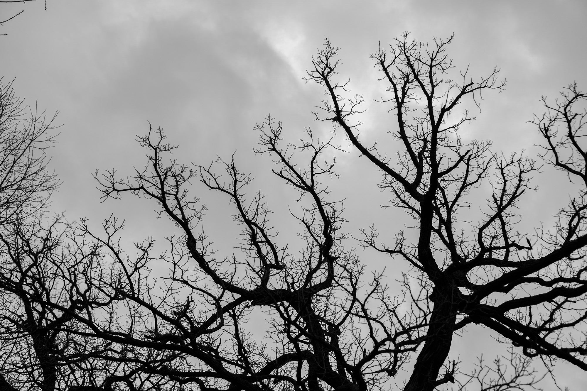 Deciduous tree against the sky in Gompers Park, Chicago IL / Darker than Green