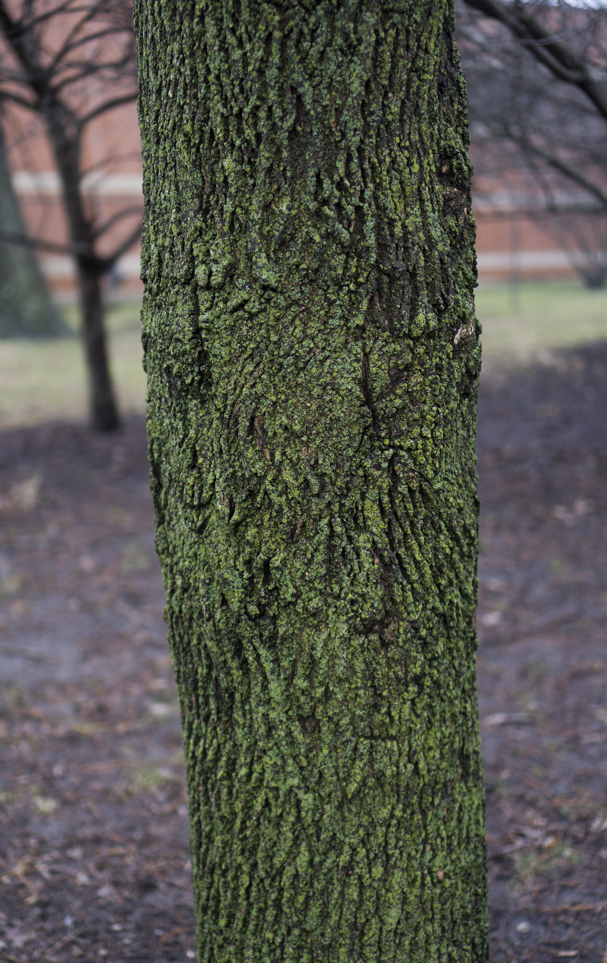 Mossy tree trunk in Gompers Park, Chicago IL / Darker than Green