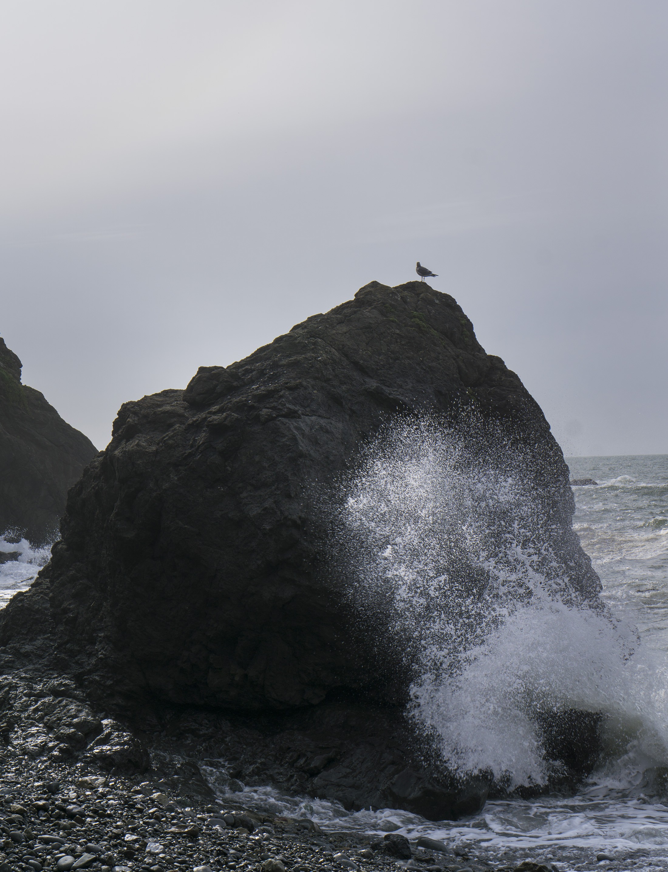 Bird perched on a boulder at Pirates Cove, Marin Headlands, Golden Gate National Recreation Area / Darker than Green