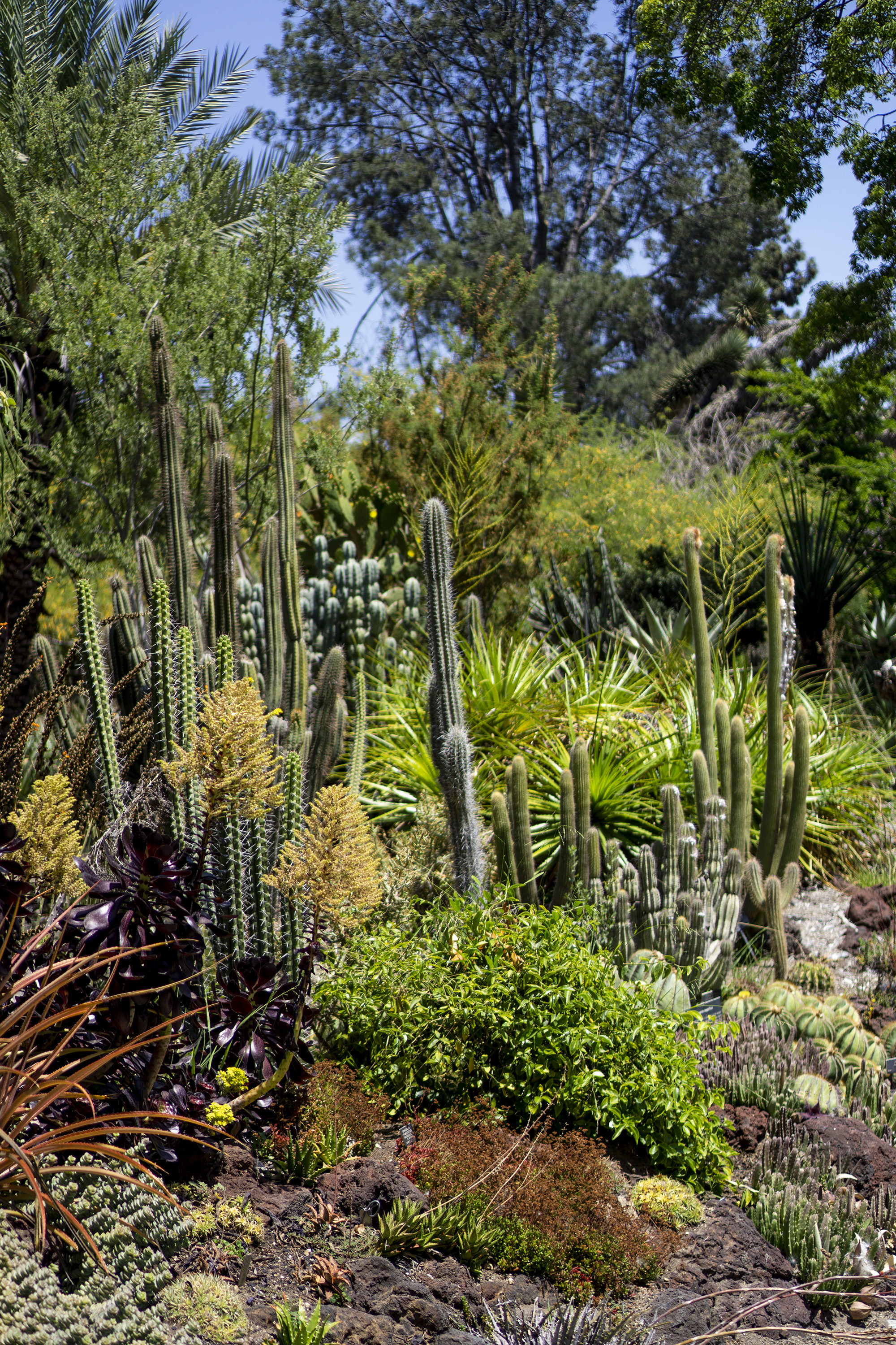 Desert Garden, Huntington Library, San Marino CA / Darker than Green