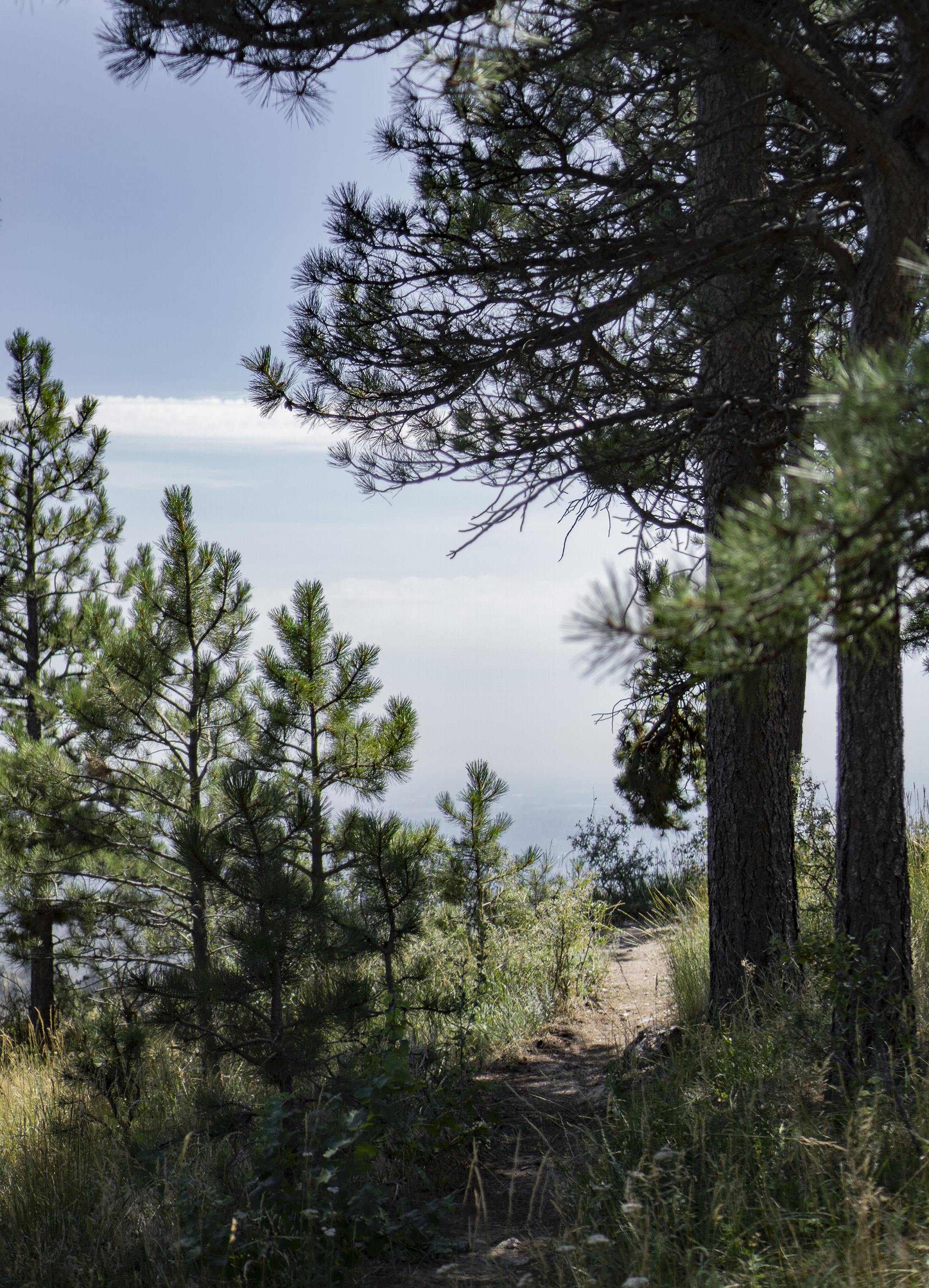 Along the Horsetooth Rock Trail, Colorado / Darker than Green