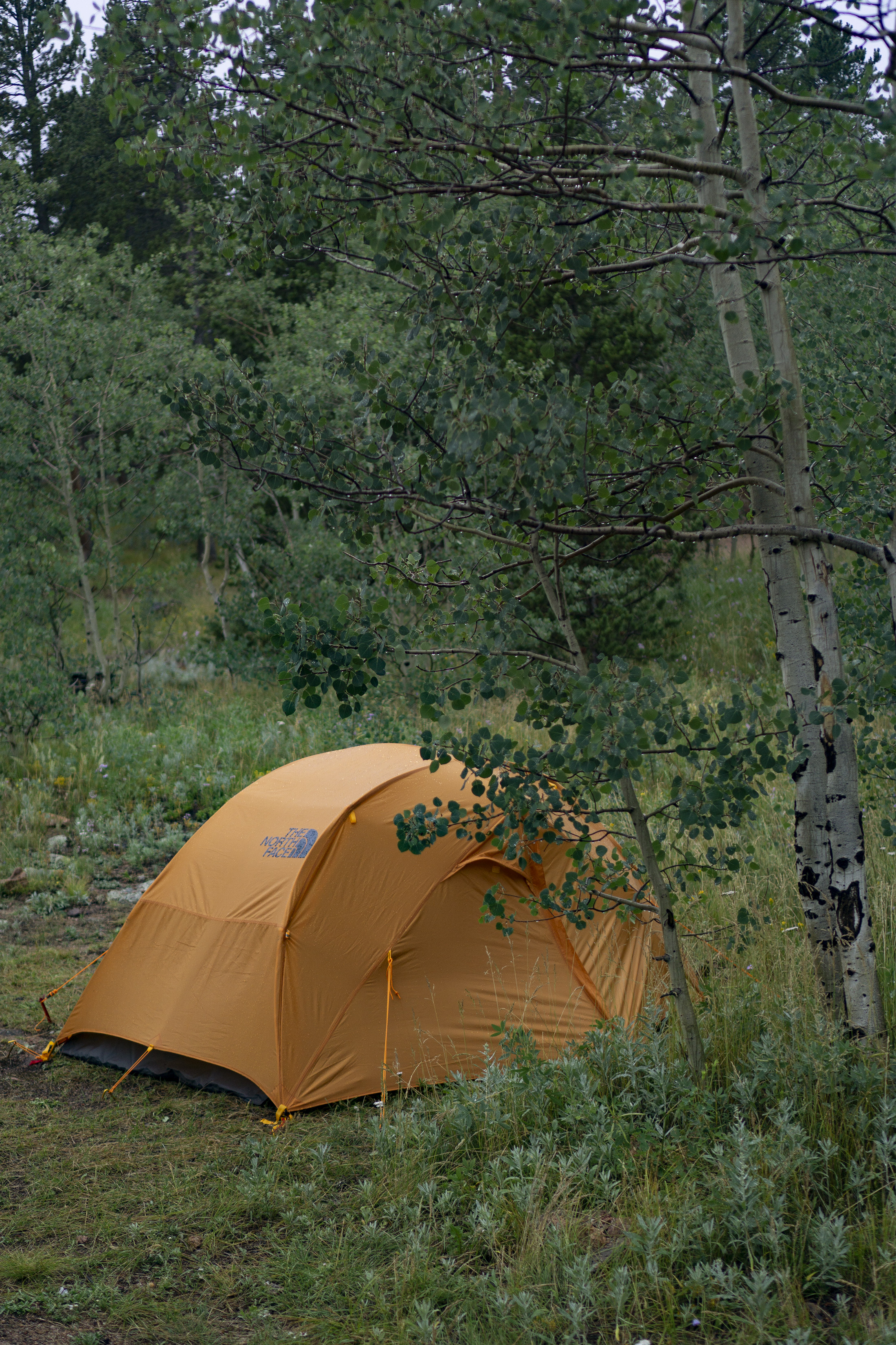 Orange North Face tent in Meeker Park Overflow Campground, Colorado / Darker than Green