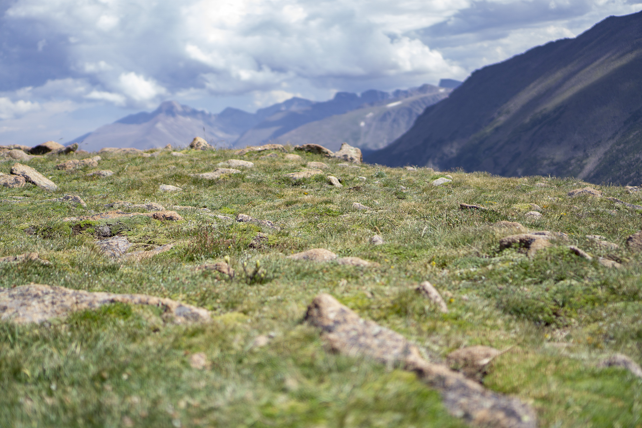 Alpine tundra, Rocky Mountain National Park / Darker than Green