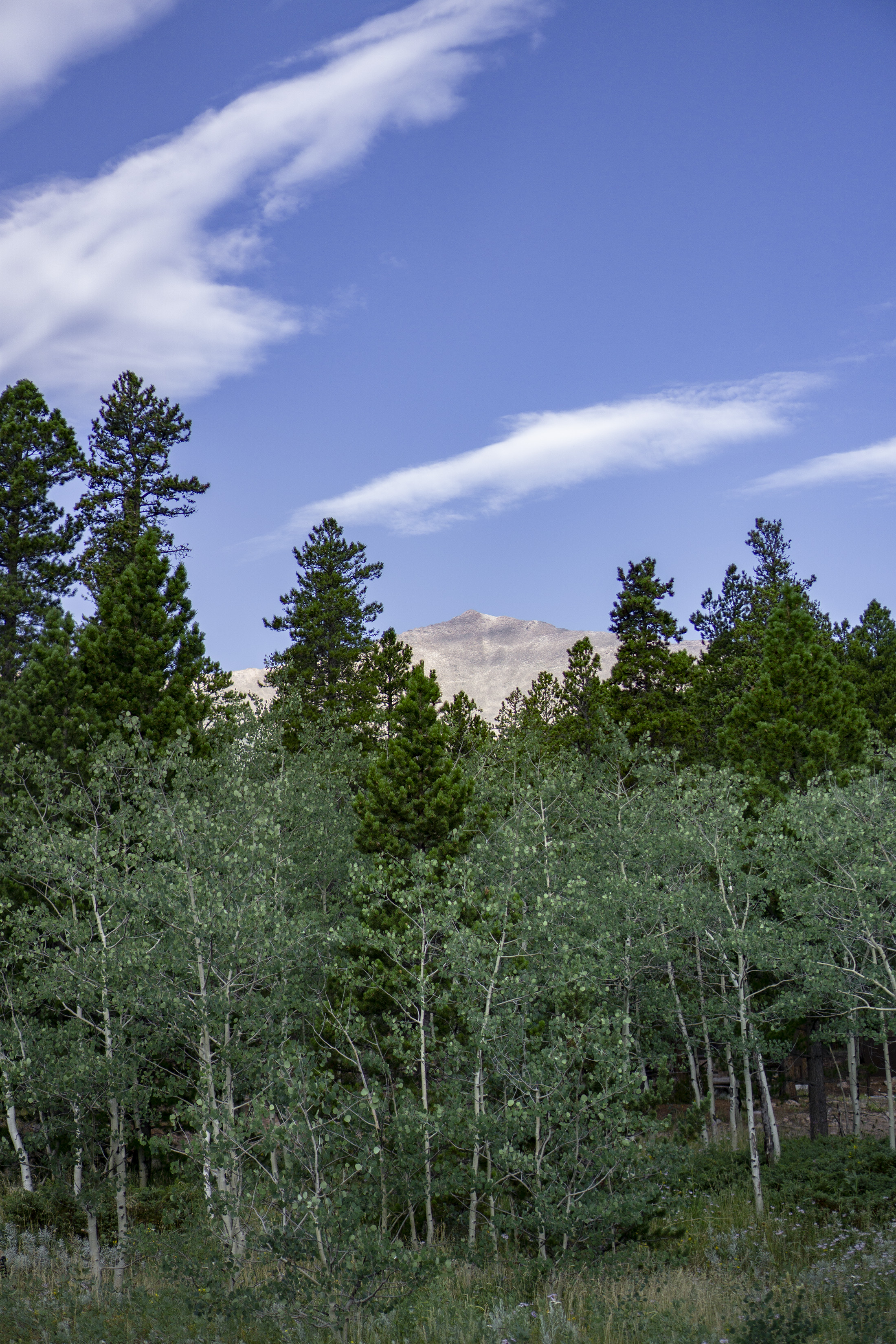 Mt Meeker through the Aspens and evergreens, Colorado / Darker than Green